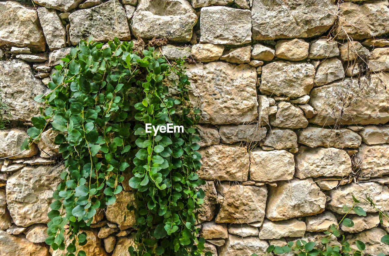wall - building feature, wall, stone wall, architecture, green color, built structure, plant, no people, day, growth, solid, backgrounds, nature, textured, plant part, leaf, full frame, outdoors, brick wall, brick