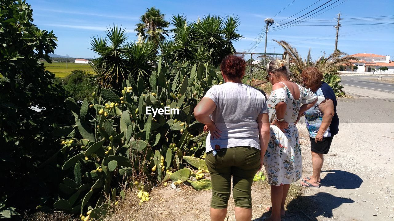rear view, palm tree, real people, walking, day, outdoors, tree, growth, casual clothing, sky, togetherness, men, plant, nature, women, adult, people