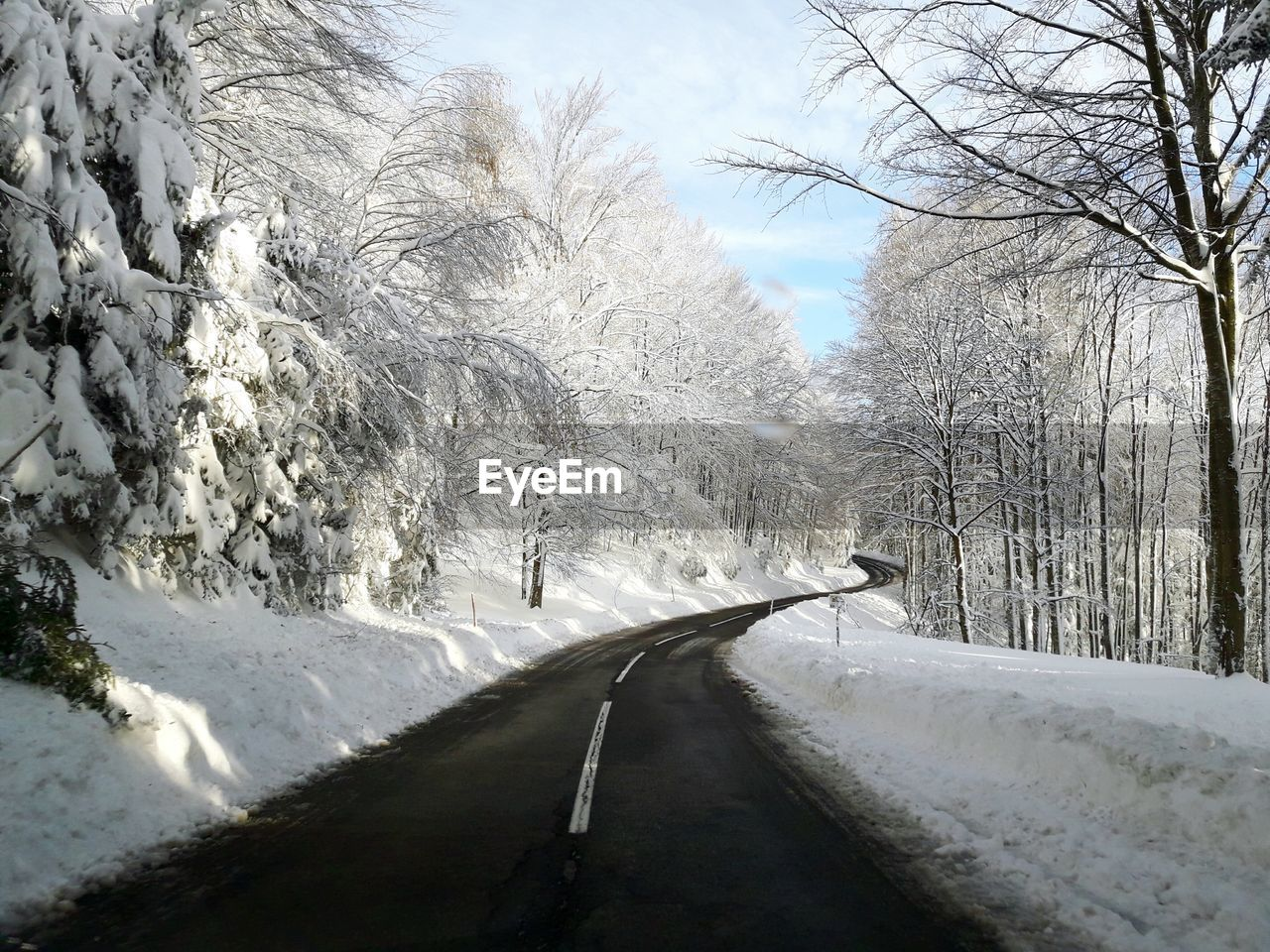 Road Along Trees In Winter