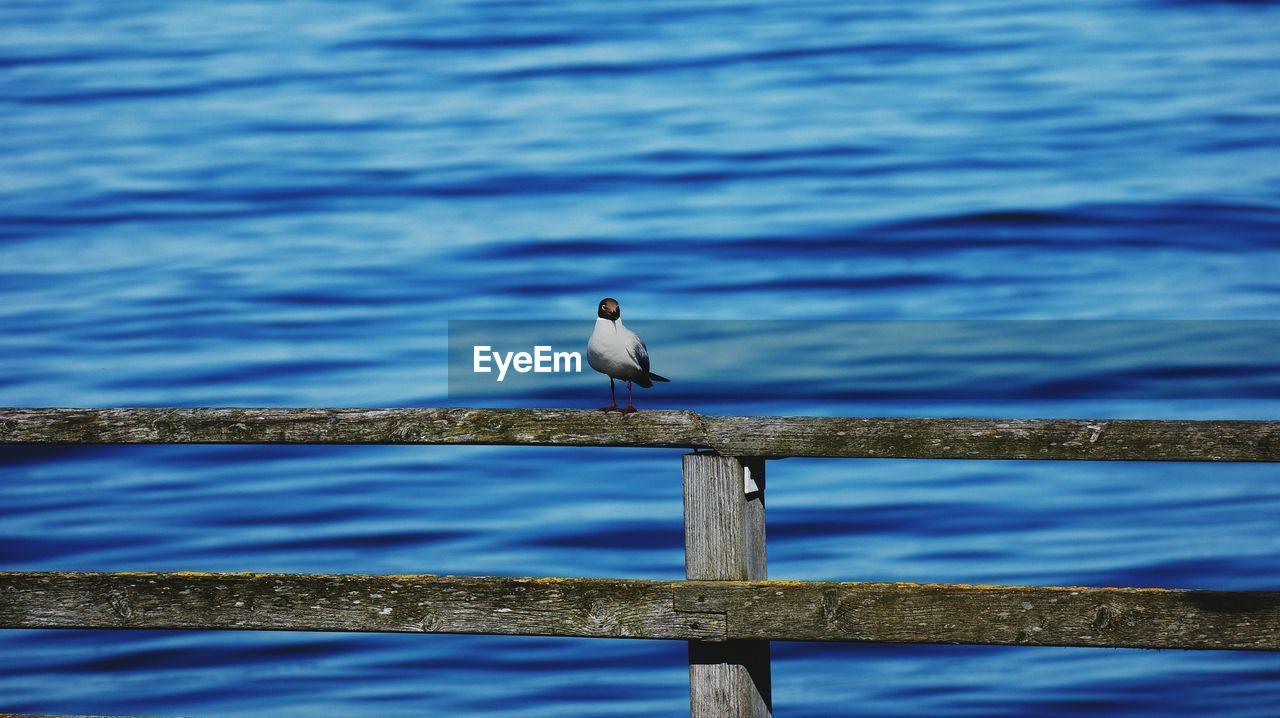Black-Headed Gull Perching On Pier Railing Against Sea