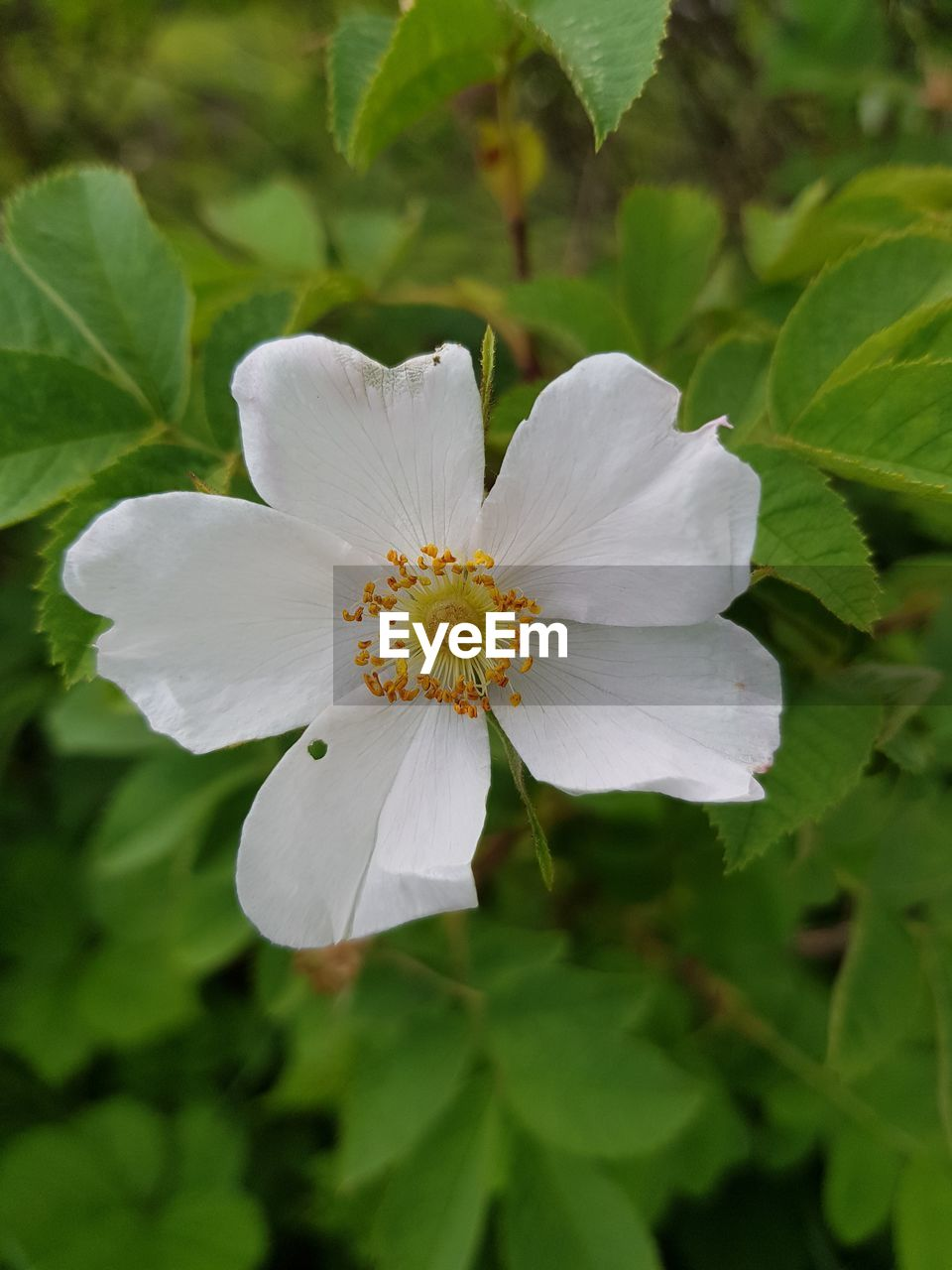 flower, white color, growth, petal, nature, fragility, plant, beauty in nature, flower head, blooming, day, leaf, freshness, close-up, outdoors, no people