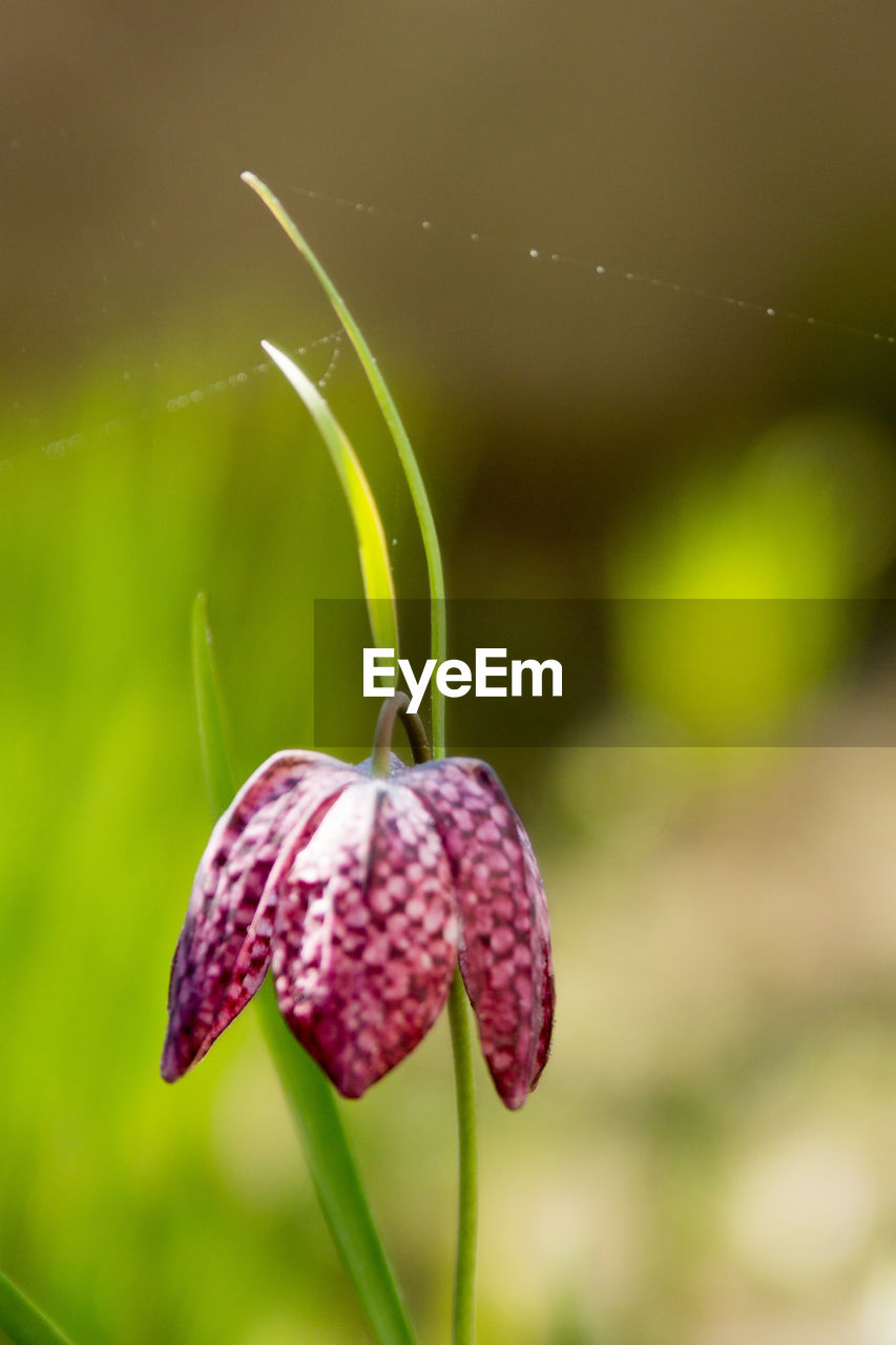 close-up, plant, growth, focus on foreground, no people, freshness, beauty in nature, fruit, nature, food, day, food and drink, healthy eating, vulnerability, outdoors, fragility, beginnings, plant stem, bud, flower, ripe, sepal