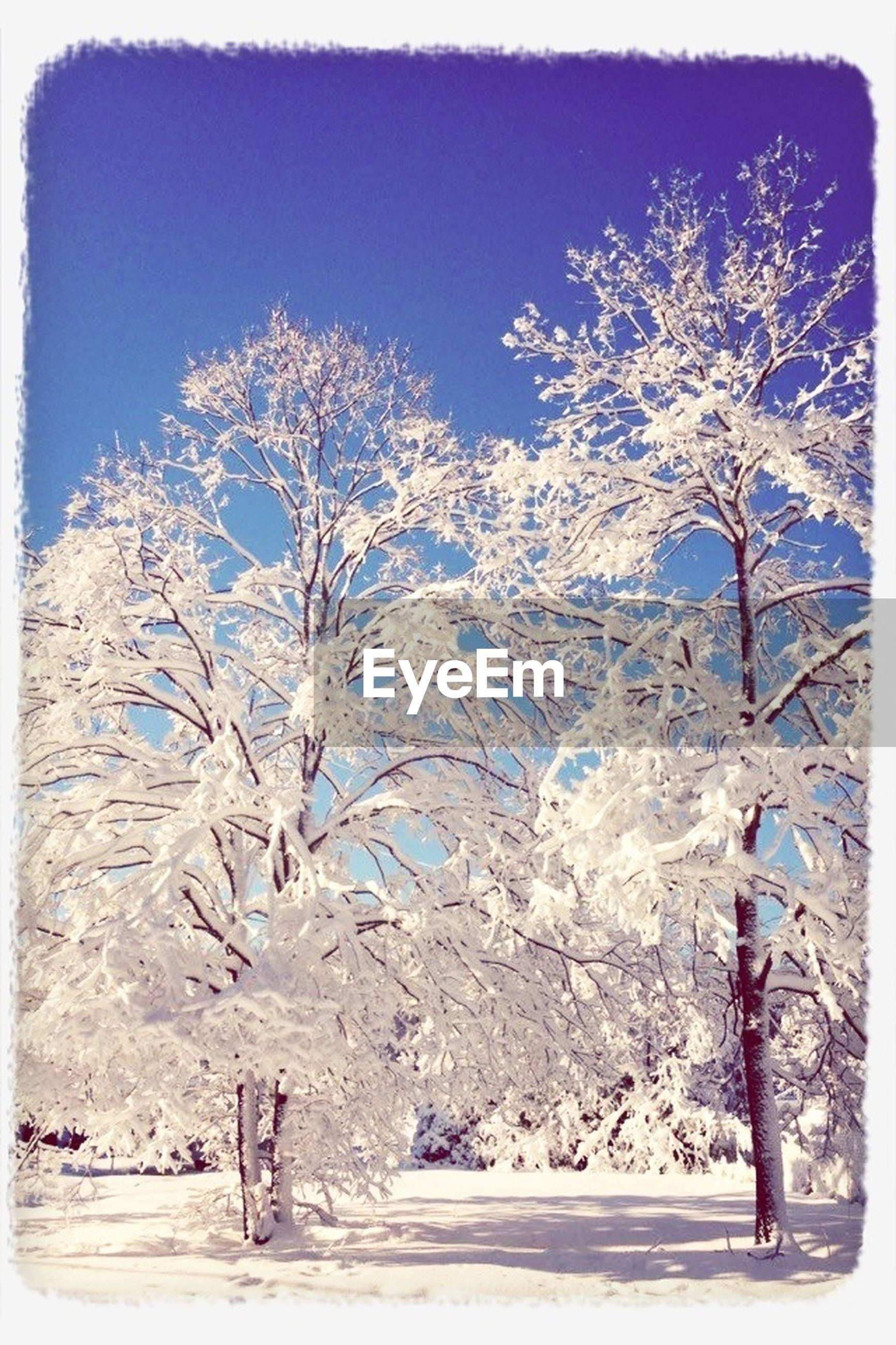 snow, winter, cold temperature, transfer print, season, tree, auto post production filter, weather, covering, nature, white color, bare tree, tranquility, tranquil scene, landscape, beauty in nature, field, frozen, sky, scenics