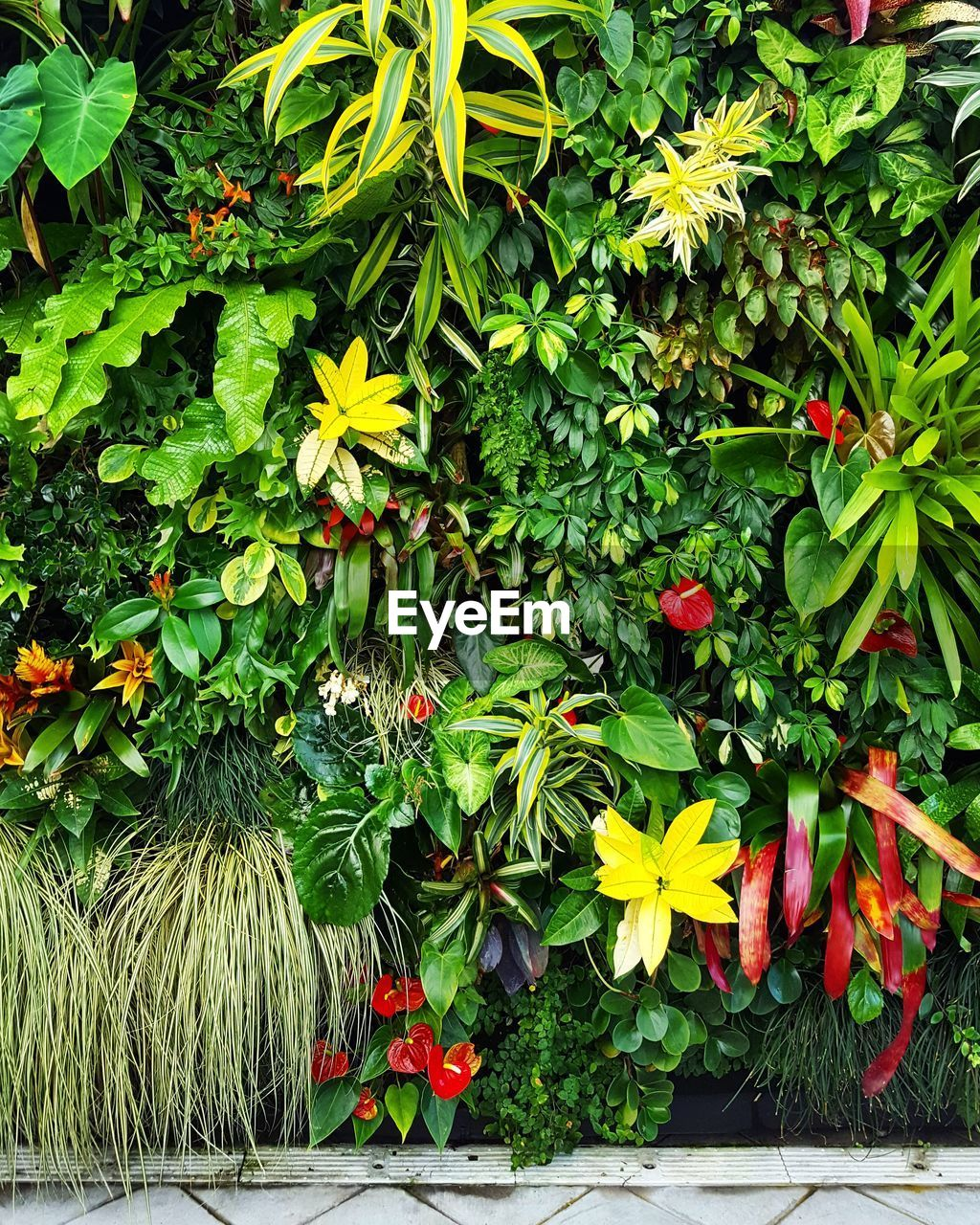 growth, green color, leaf, plant, flower, red, outdoors, nature, day, no people, freshness, beauty in nature, fragility, close-up, flower head