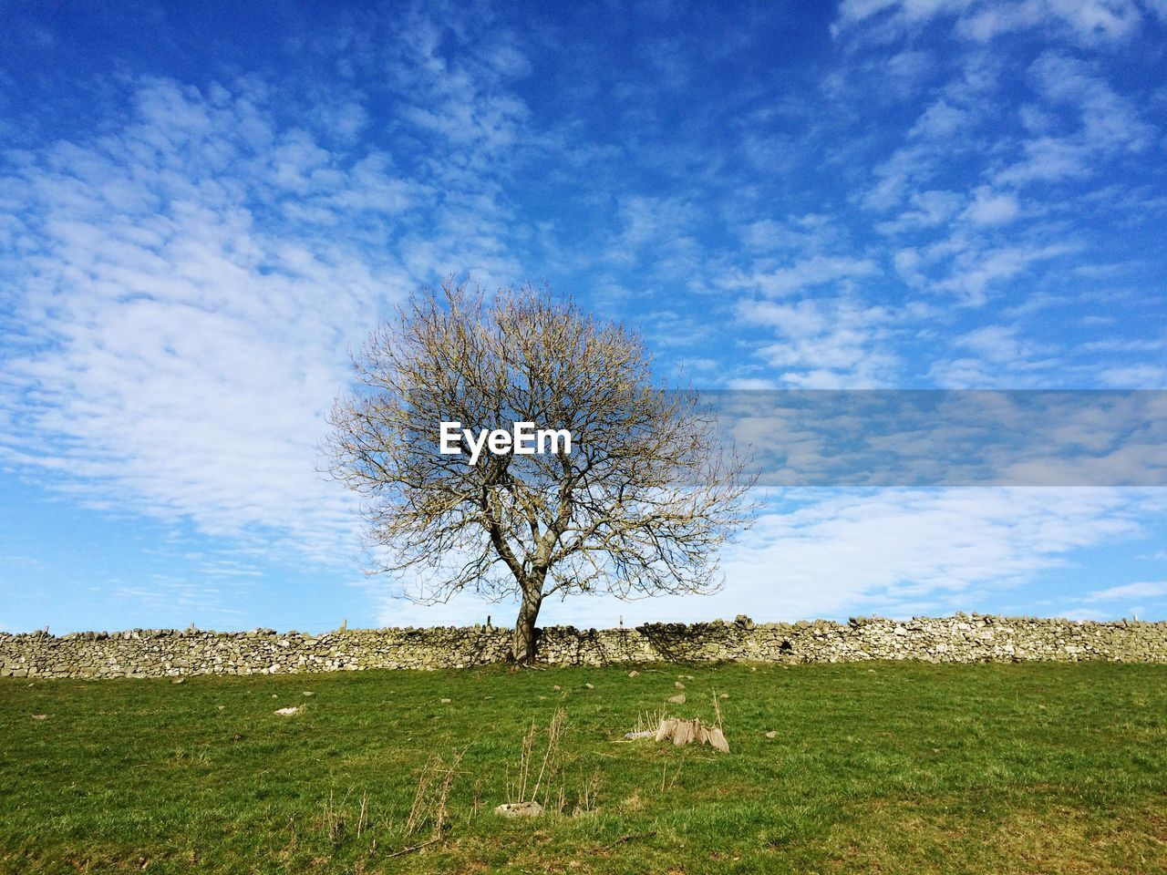 lone, bare tree, landscape, isolated, solitude, field, tree, tree trunk, blue, tranquility, beauty in nature, sky, day, horizon over land, grass, outdoors, branch, nature, no people