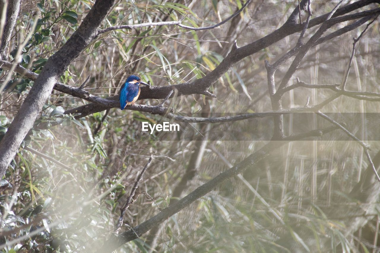 Low angle view of kingfisher perching on tree