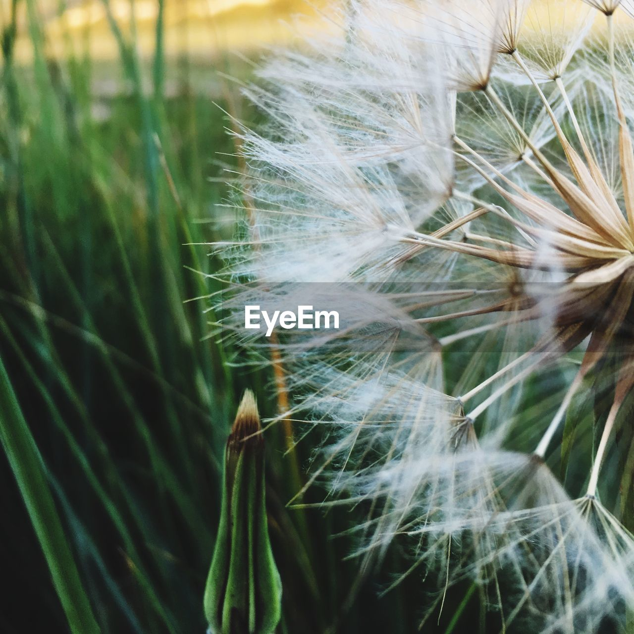 growth, nature, plant, no people, close-up, green color, beauty in nature, outdoors, fragility, day, ear of wheat, grass, freshness