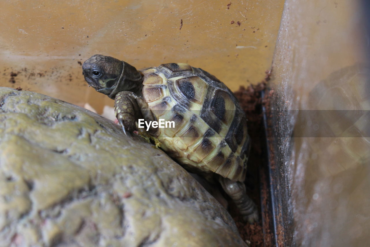 animal themes, animals in the wild, no people, animal wildlife, close-up, one animal, day, reptile, nature, outdoors, water, tortoise shell