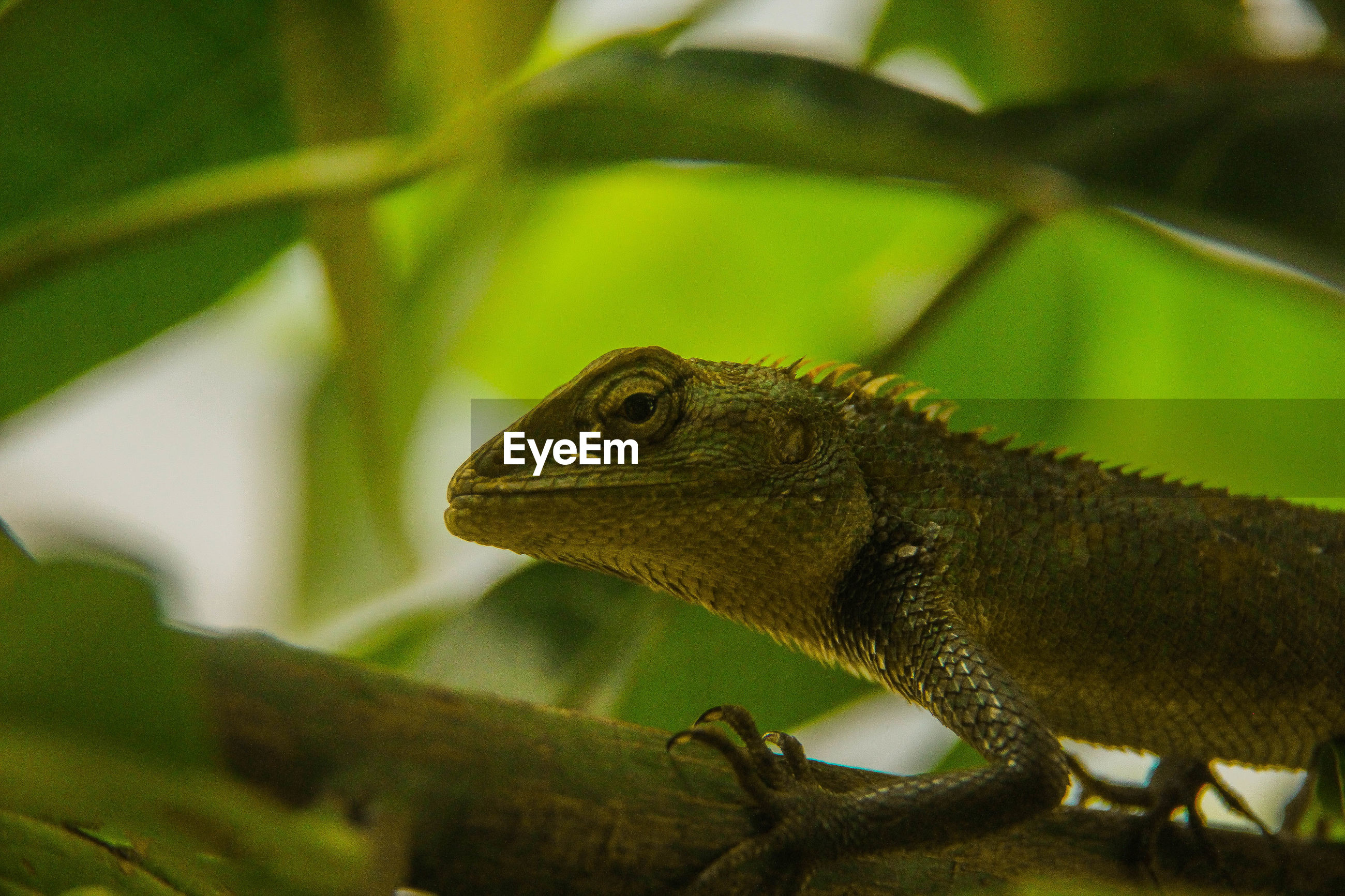 CLOSE-UP OF A LIZARD ON TREE BRANCH