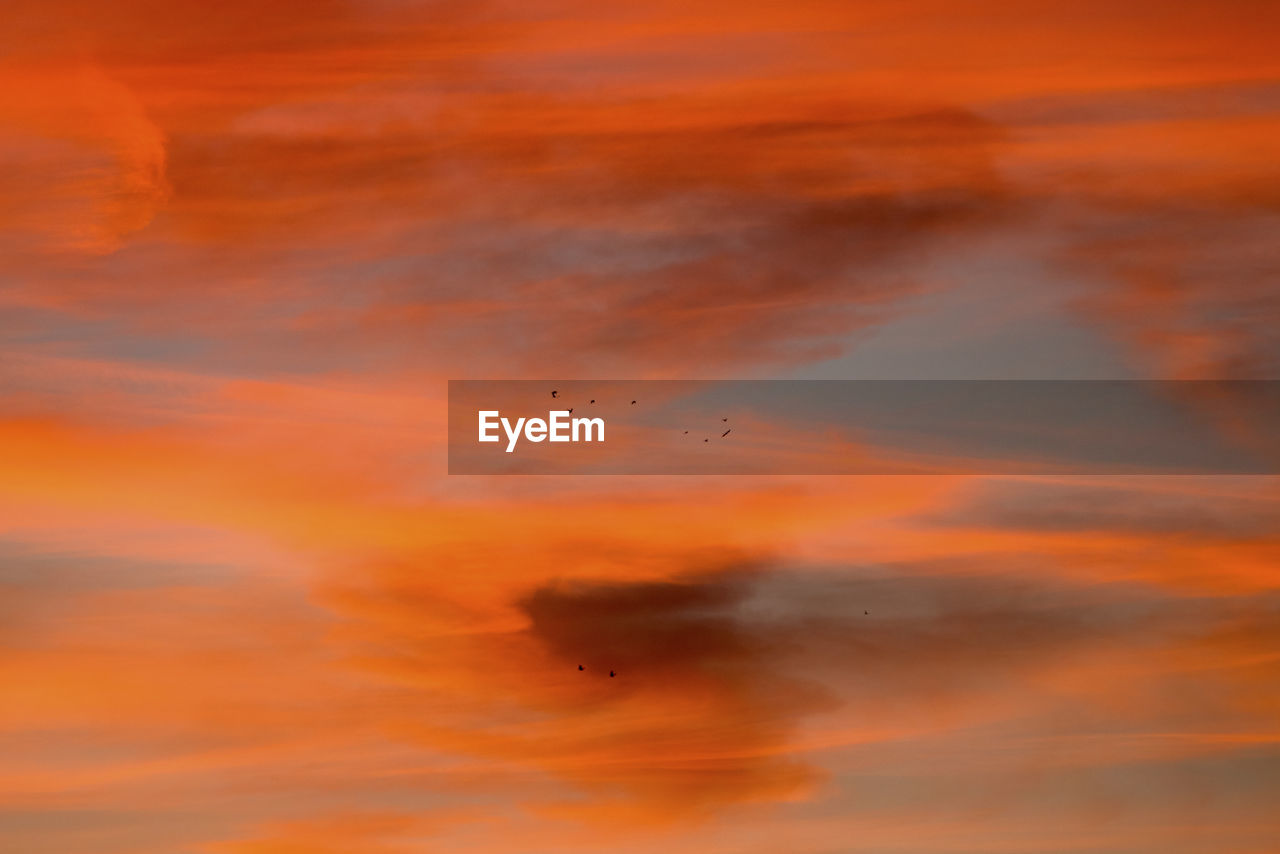 orange color, sunset, sky, cloud - sky, bird, flying, beauty in nature, animal, animal themes, vertebrate, animal wildlife, animals in the wild, group of animals, scenics - nature, mid-air, nature, tranquil scene, low angle view, tranquility, idyllic, no people, outdoors, flock of birds