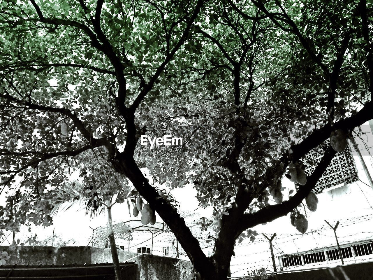 tree, branch, low angle view, growth, built structure, day, nature, building exterior, outdoors, architecture, no people, city, sky