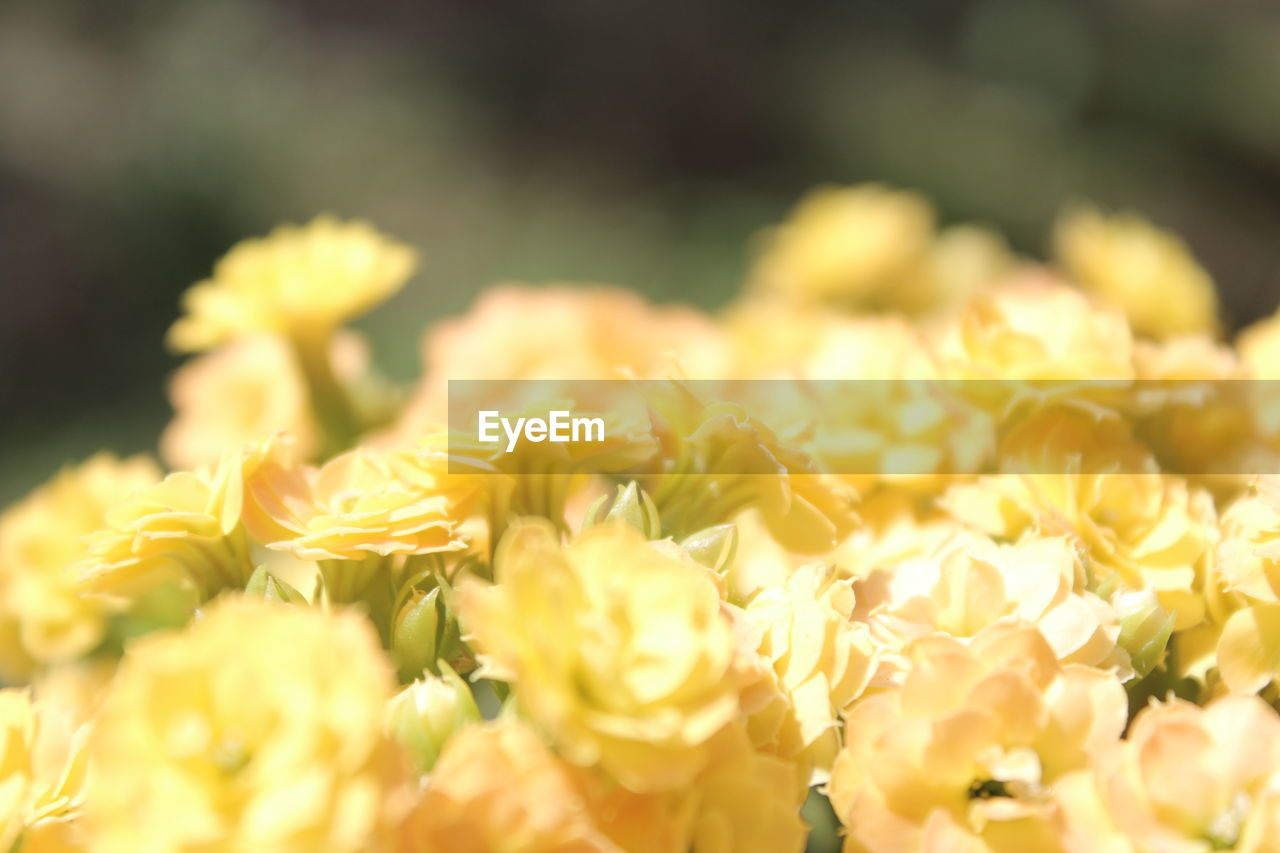 flower, freshness, nature, fragility, petal, beauty in nature, yellow, selective focus, close-up, no people, growth, plant, day, flower head, outdoors