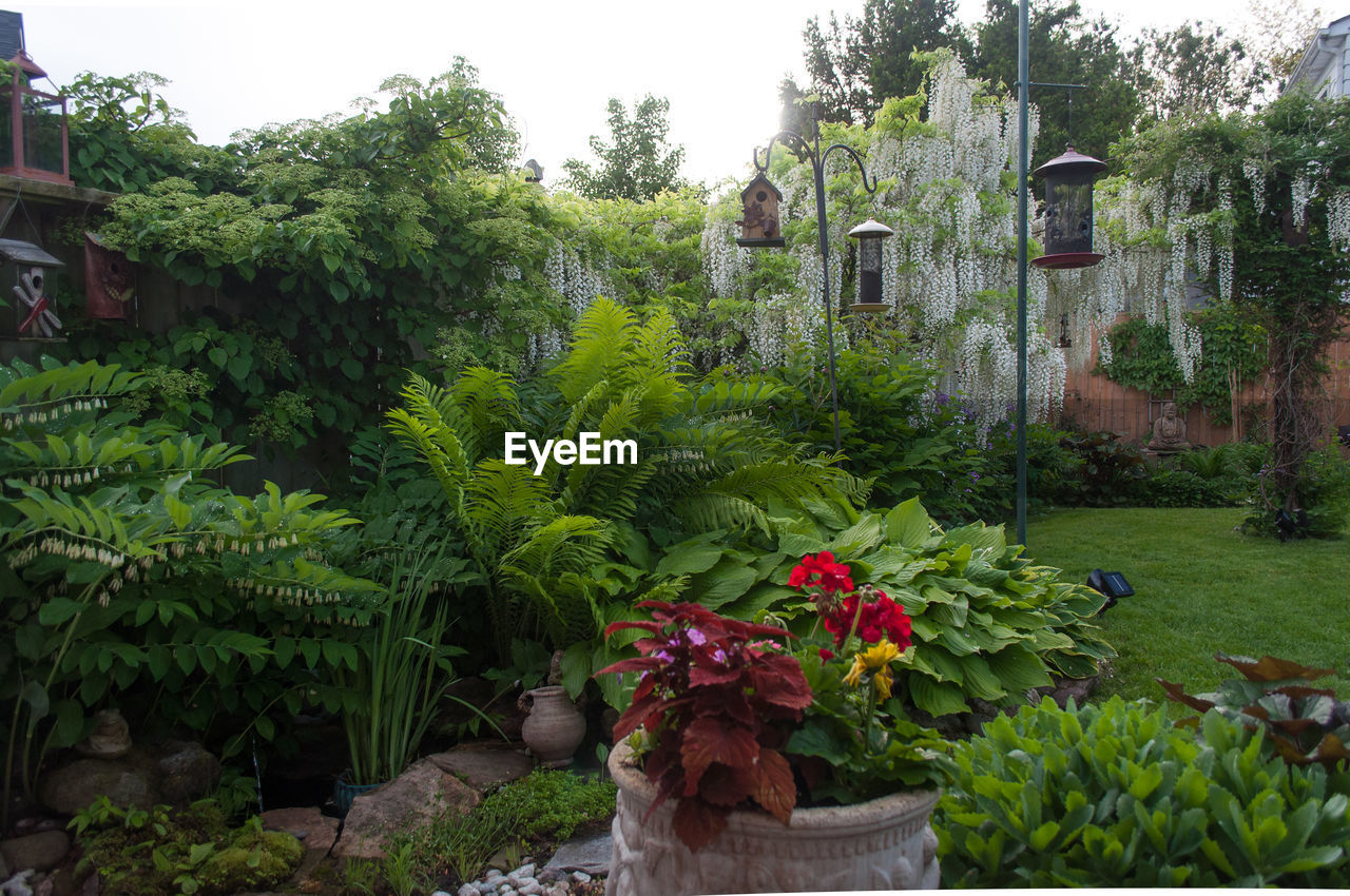 FLOWERING PLANTS AND TREES IN GARDEN AGAINST BUILDING