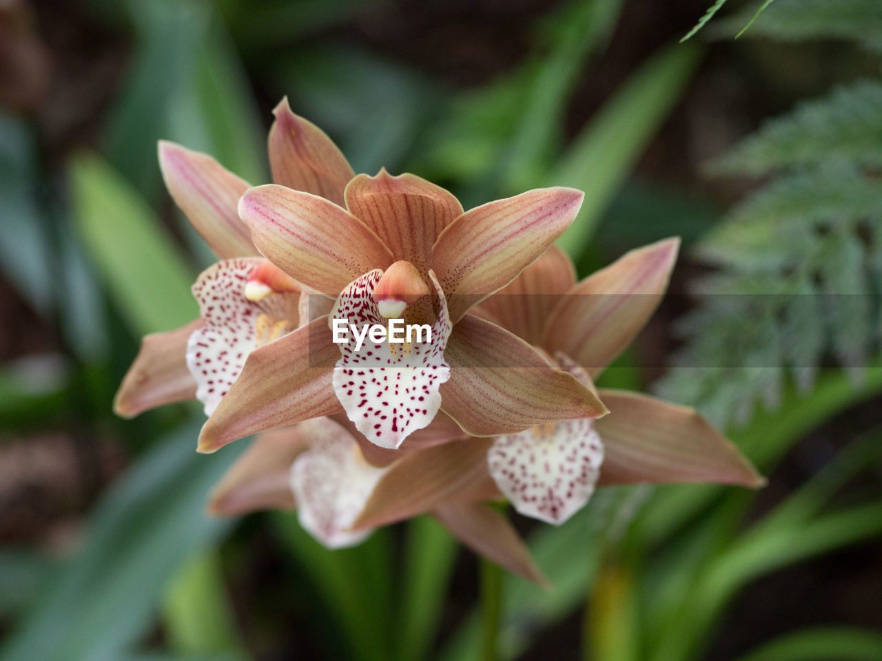 petal, flower, fragility, beauty in nature, nature, flower head, freshness, growth, day, blooming, close-up, plant, no people, outdoors, day lily