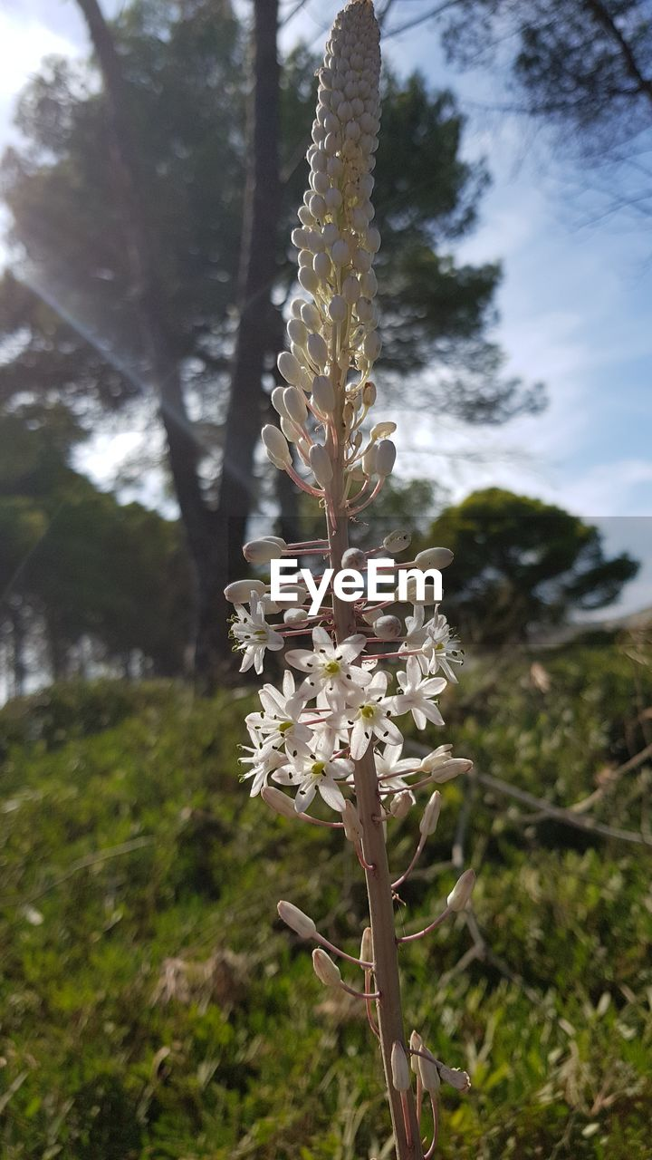 growth, nature, beauty in nature, day, flower, no people, tree, outdoors, plant, fragility, focus on foreground, field, close-up, tranquility, freshness, branch, flower head