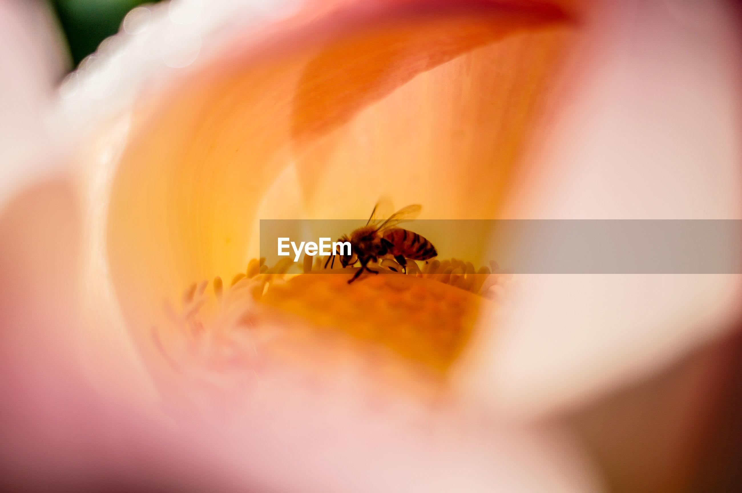 Close-up of honeybee on flower