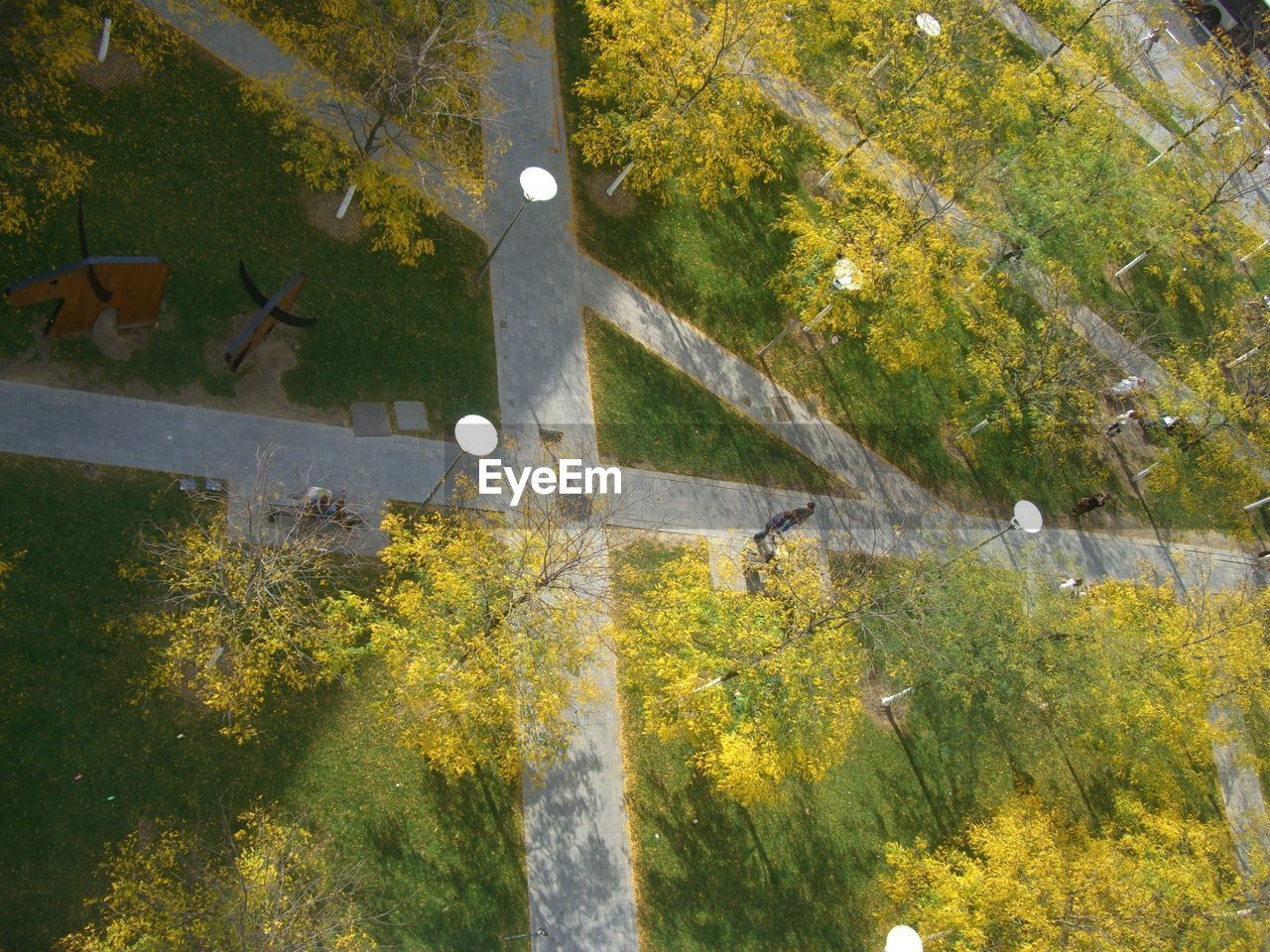 High Angle View Of Trees In Park