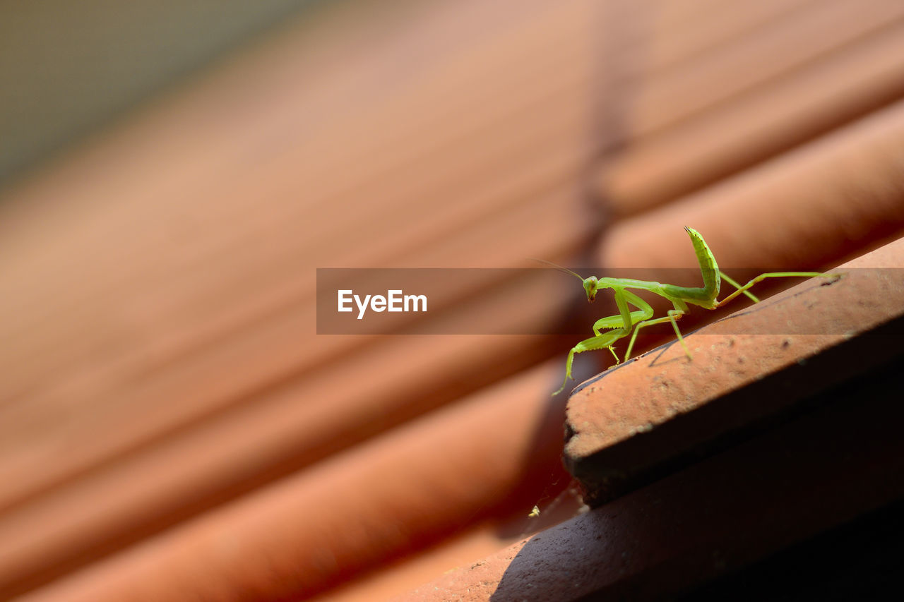 animal wildlife, animal themes, animals in the wild, animal, invertebrate, close-up, insect, no people, one animal, selective focus, focus on foreground, day, praying mantis, nature, outdoors, green color, leaf, plant part, wood - material, railing