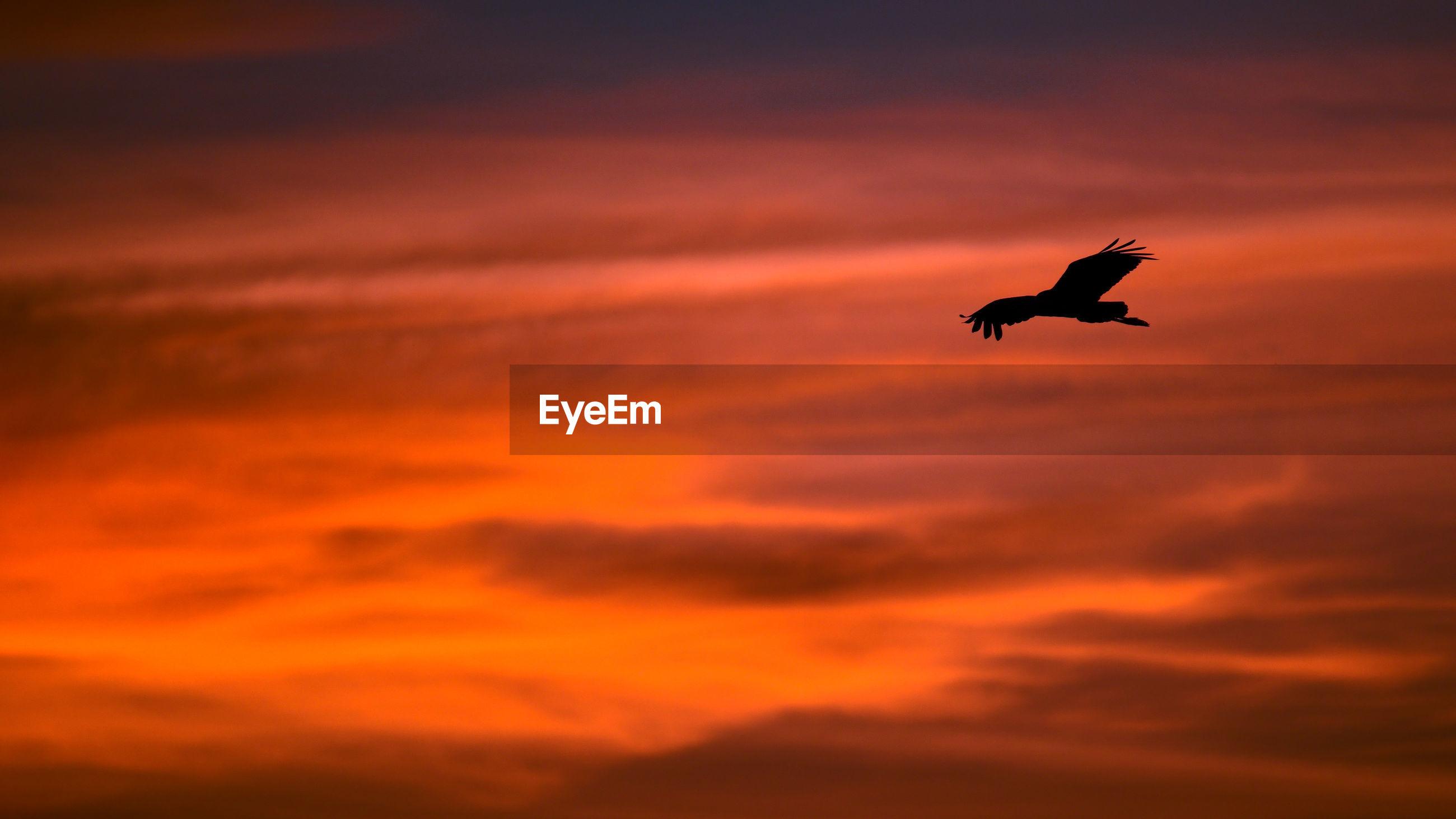 BIRD FLYING IN SKY