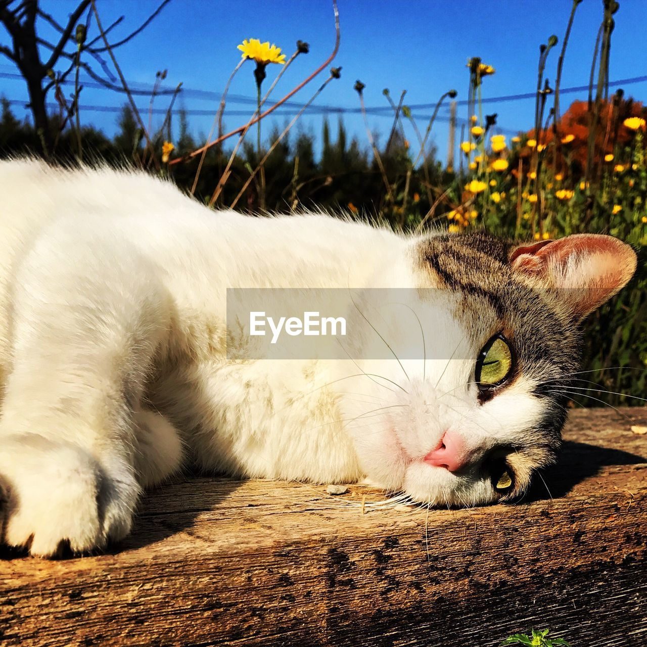 animal themes, one animal, domestic cat, pets, domestic animals, mammal, feline, cat, no people, whisker, outdoors, day, close-up, nature