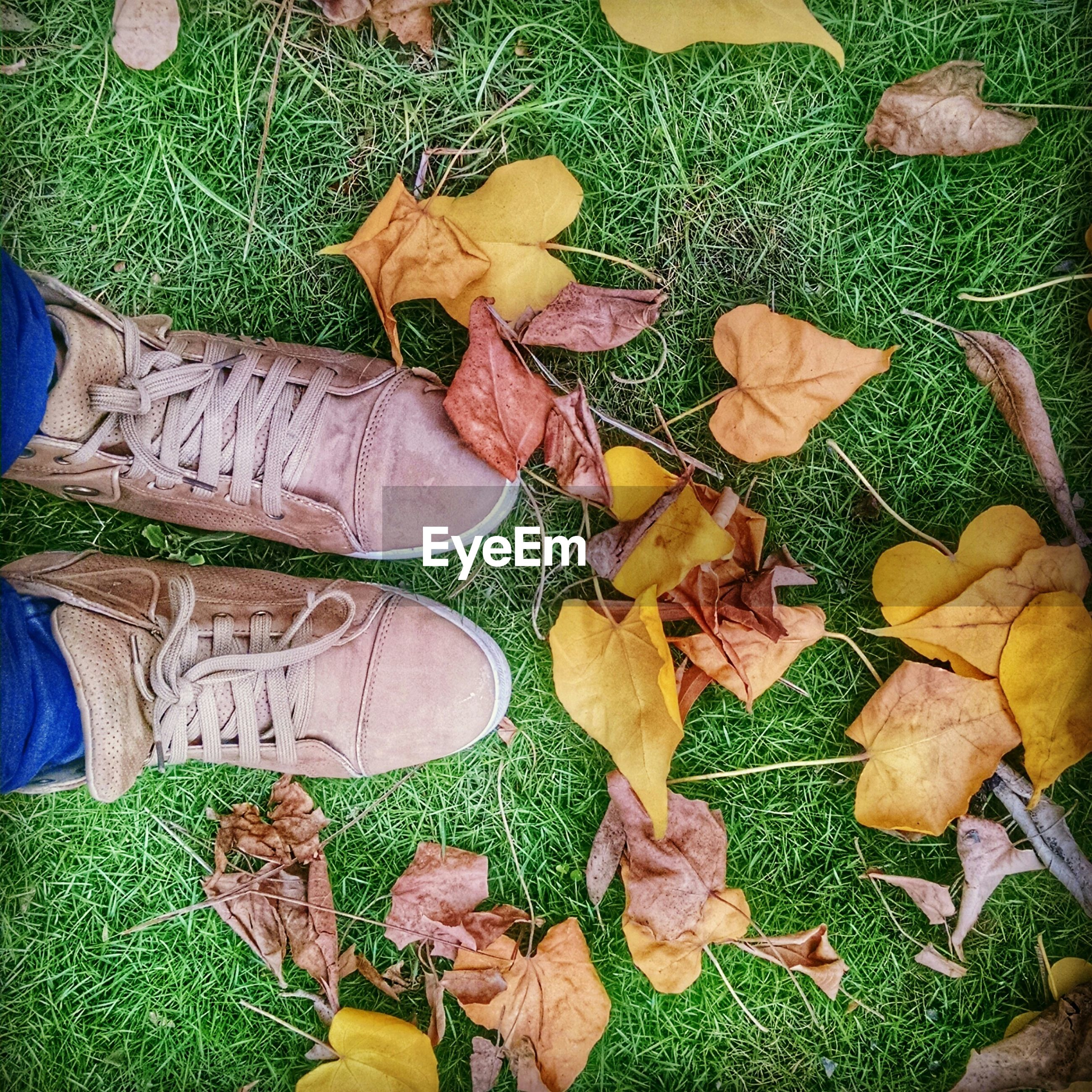 leaf, autumn, leaves, high angle view, change, fallen, dry, green color, shoe, field, season, abundance, leaf vein, grass, multi colored, low section, nature, day, outdoors, close-up