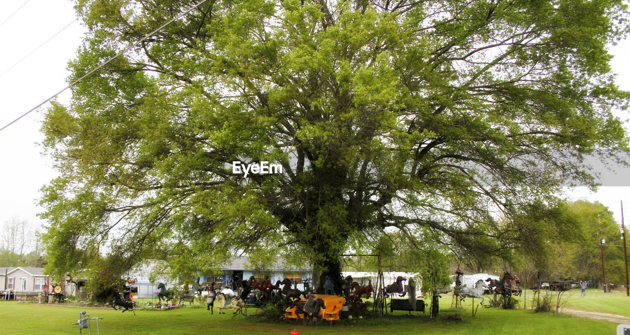 tree, day, grass, outdoors, nature, green color, growth, real people, sky