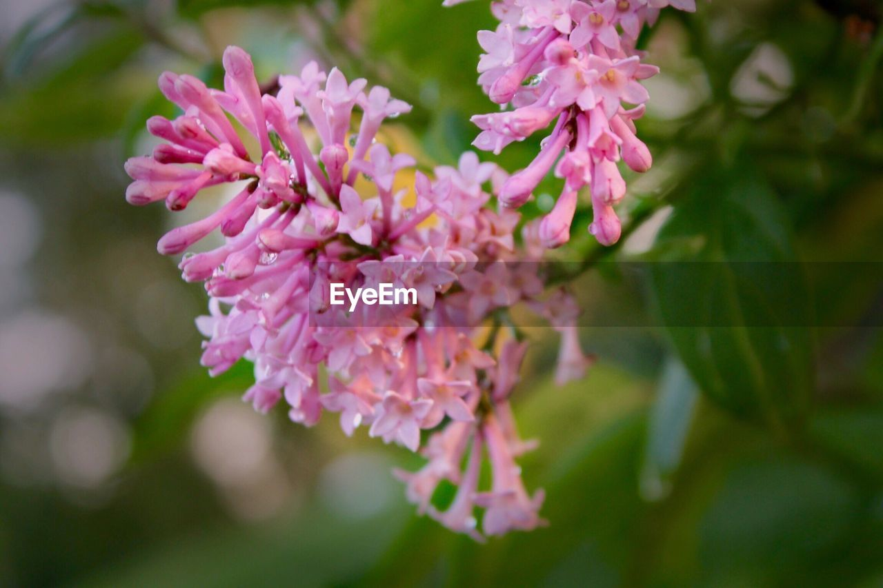 flower, pink color, beauty in nature, nature, fragility, petal, no people, close-up, freshness, growth, focus on foreground, day, plant, outdoors, flower head, blooming