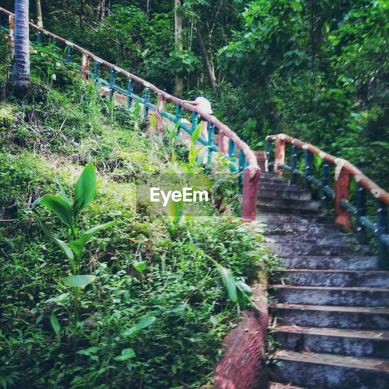 plant, staircase, tree, railing, architecture, nature, forest, growth, bridge, land, steps and staircases, connection, motion, green color, day, bridge - man made structure, built structure, no people, footbridge, water, outdoors