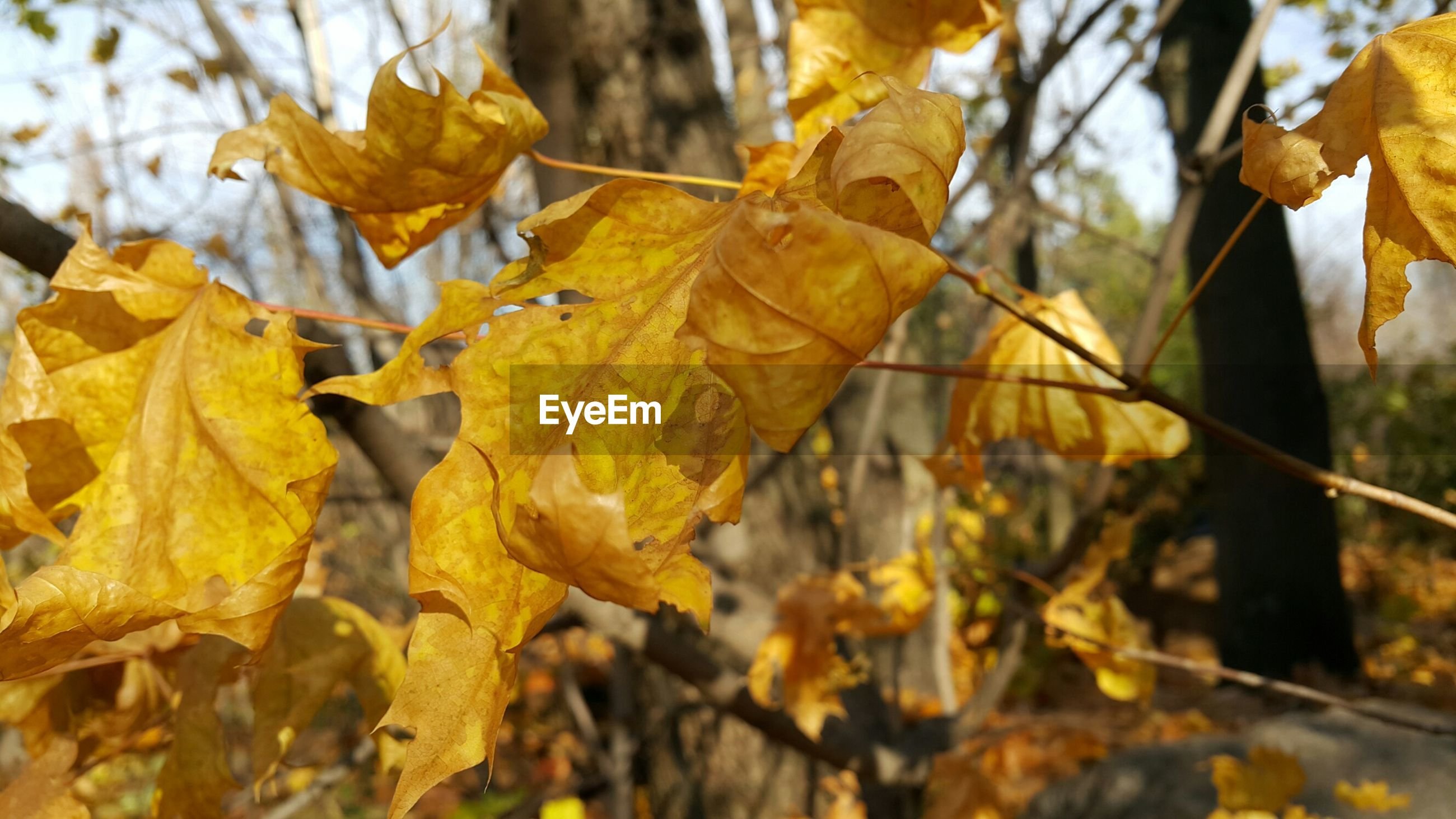 autumn, yellow, leaf, change, focus on foreground, season, close-up, leaves, tree, nature, branch, growth, dry, selective focus, beauty in nature, day, outdoors, no people, orange color, fragility