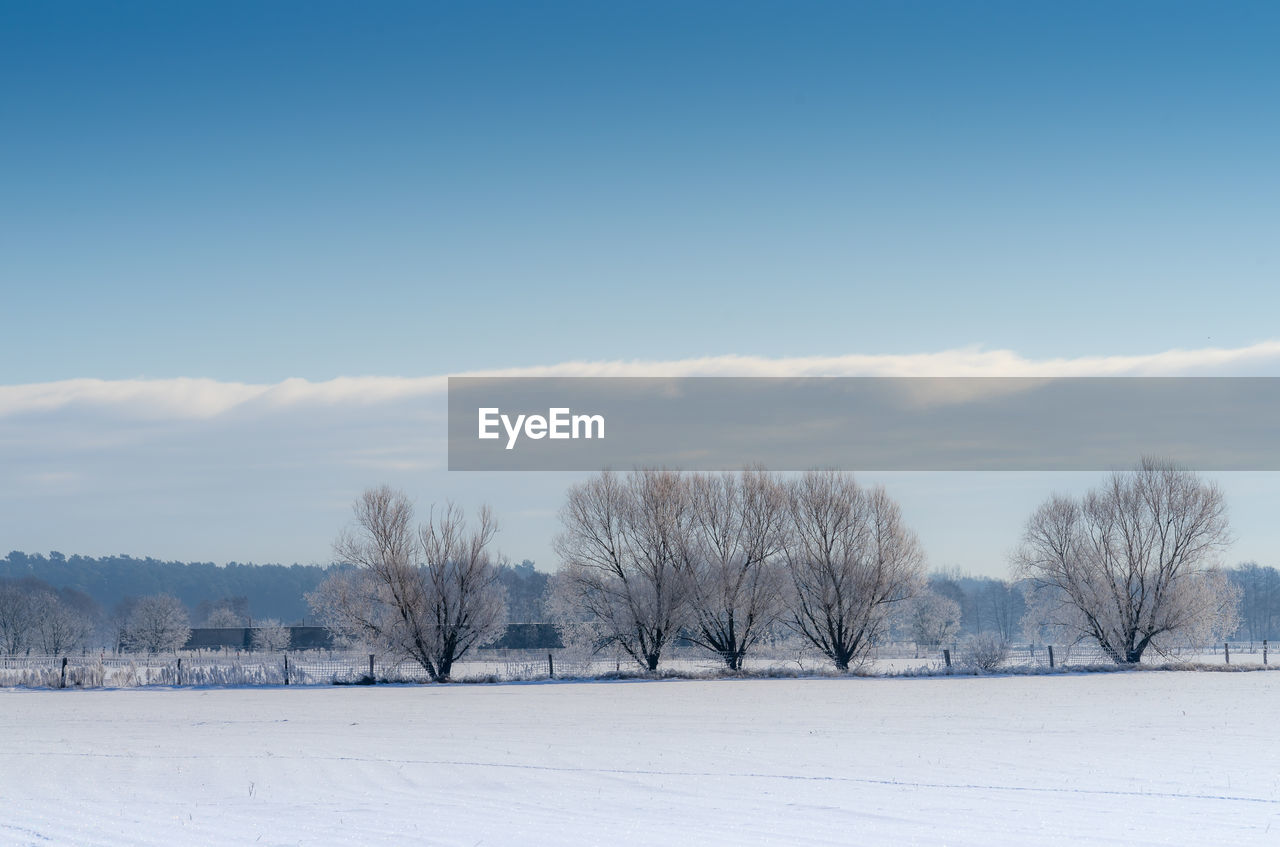 BARE TREES ON SNOWY FIELD AGAINST SKY