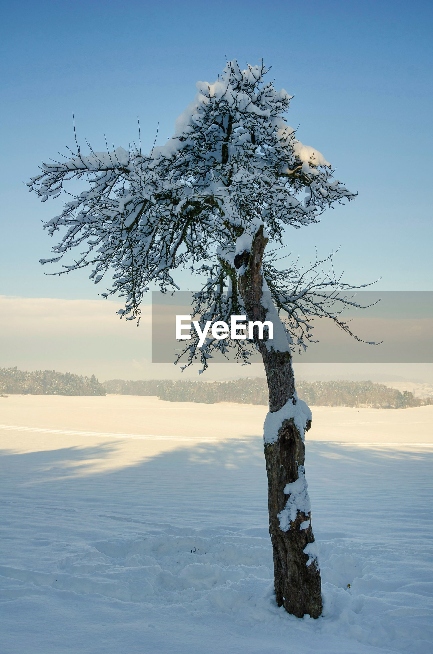 tree, tranquility, winter, snow, beauty in nature, nature, bare tree, cold temperature, landscape, tree trunk, branch, lone, no people, outdoors, scenics, day, sky
