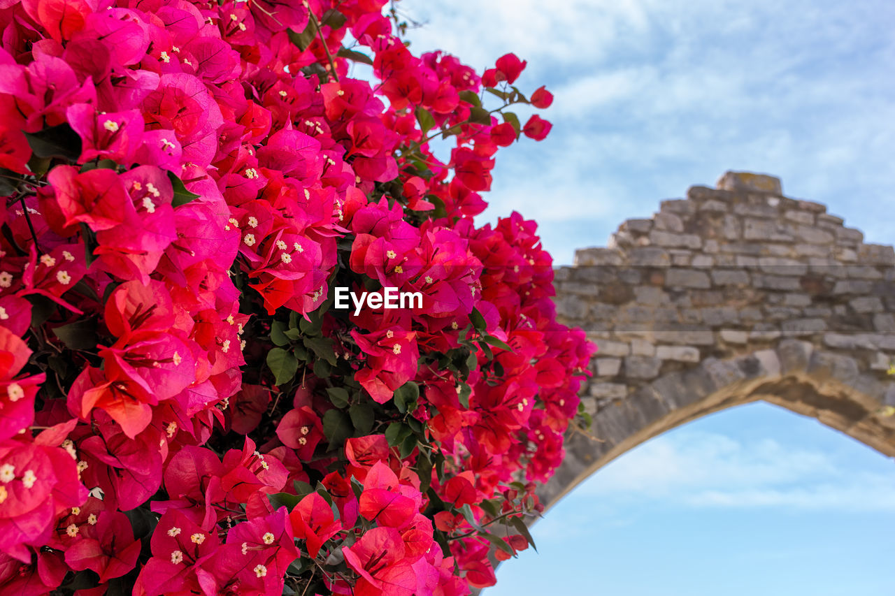 beauty in nature, flower, growth, sky, low angle view, pink color, nature, architecture, outdoors, day, cloud - sky, red, built structure, fragility, no people, building exterior, freshness, tree, close-up