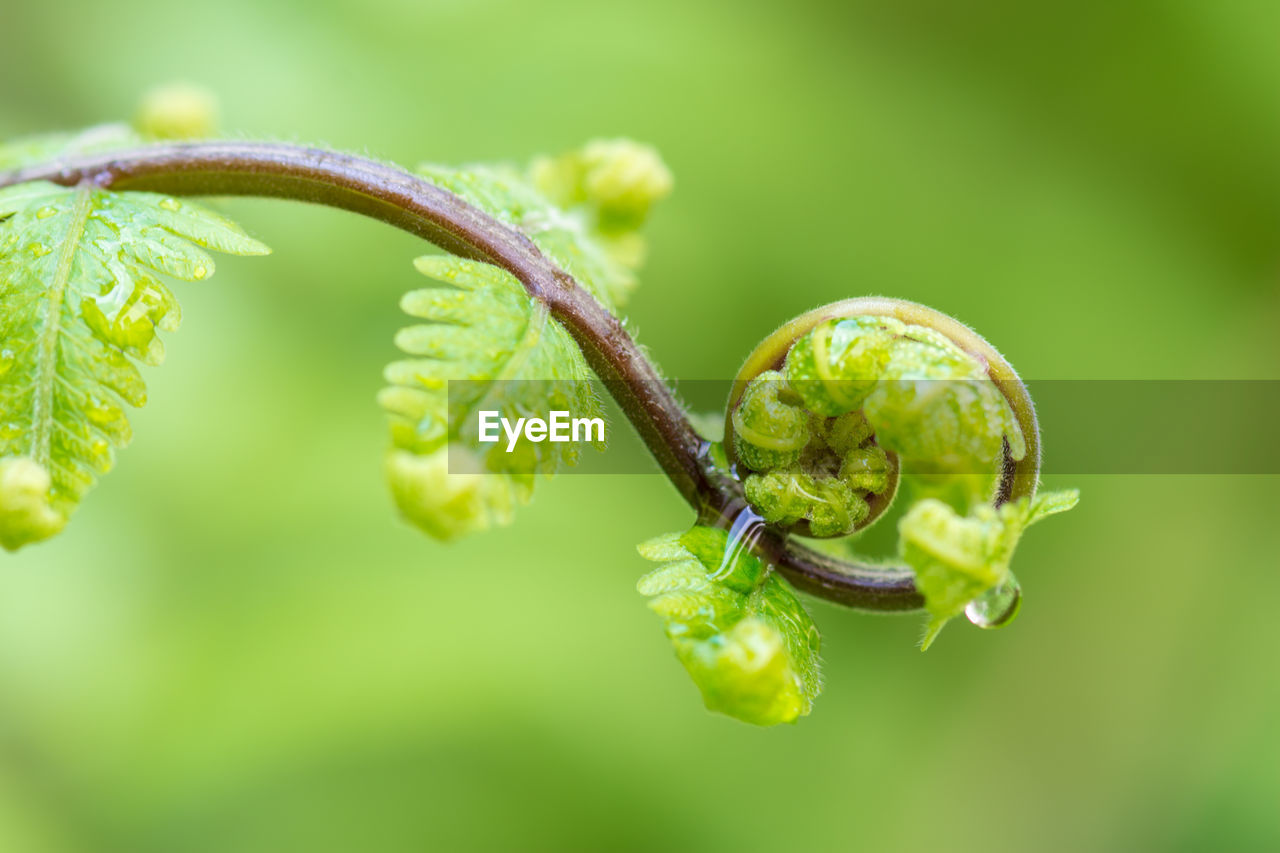 green color, plant, close-up, growth, beauty in nature, no people, nature, focus on foreground, leaf, plant part, selective focus, day, vulnerability, freshness, fragility, plant stem, beginnings, tendril, outdoors, spiral