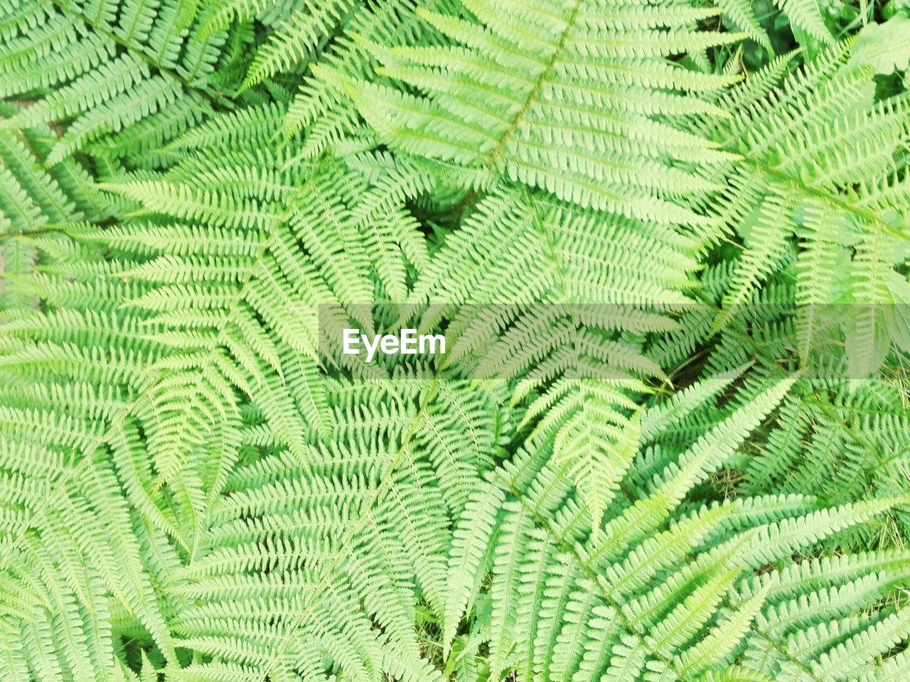 green color, leaf, plant part, plant, no people, backgrounds, fern, close-up, full frame, nature, growth, tree, beauty in nature, extreme close-up, natural pattern, pattern, textured, outdoors, day, macro, palm leaf, rainforest