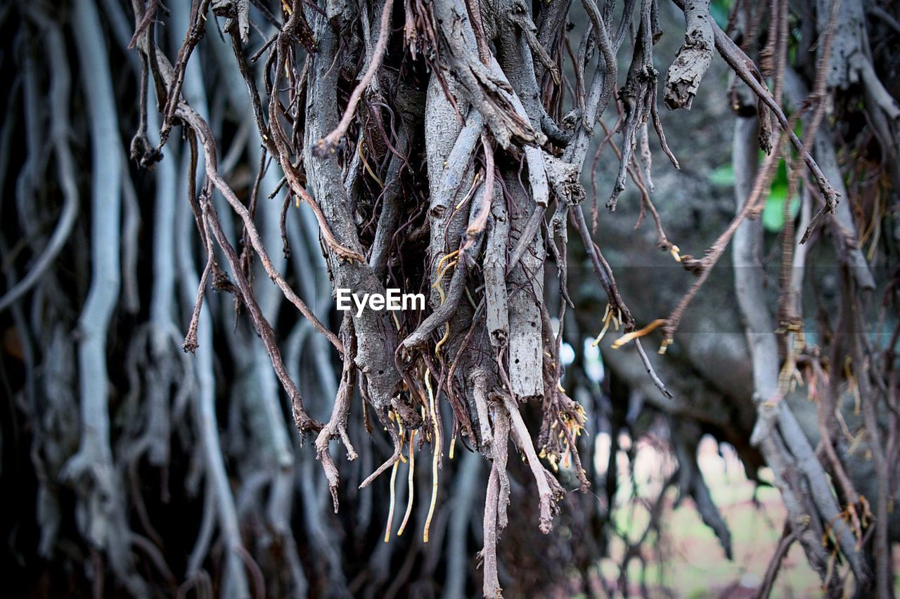 tree, day, tree trunk, branch, outdoors, no people, nature, close-up