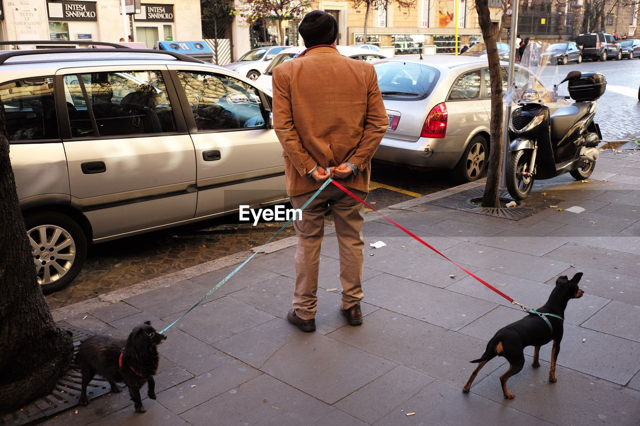 Rear View Of A Man With Dogs Outdoors
