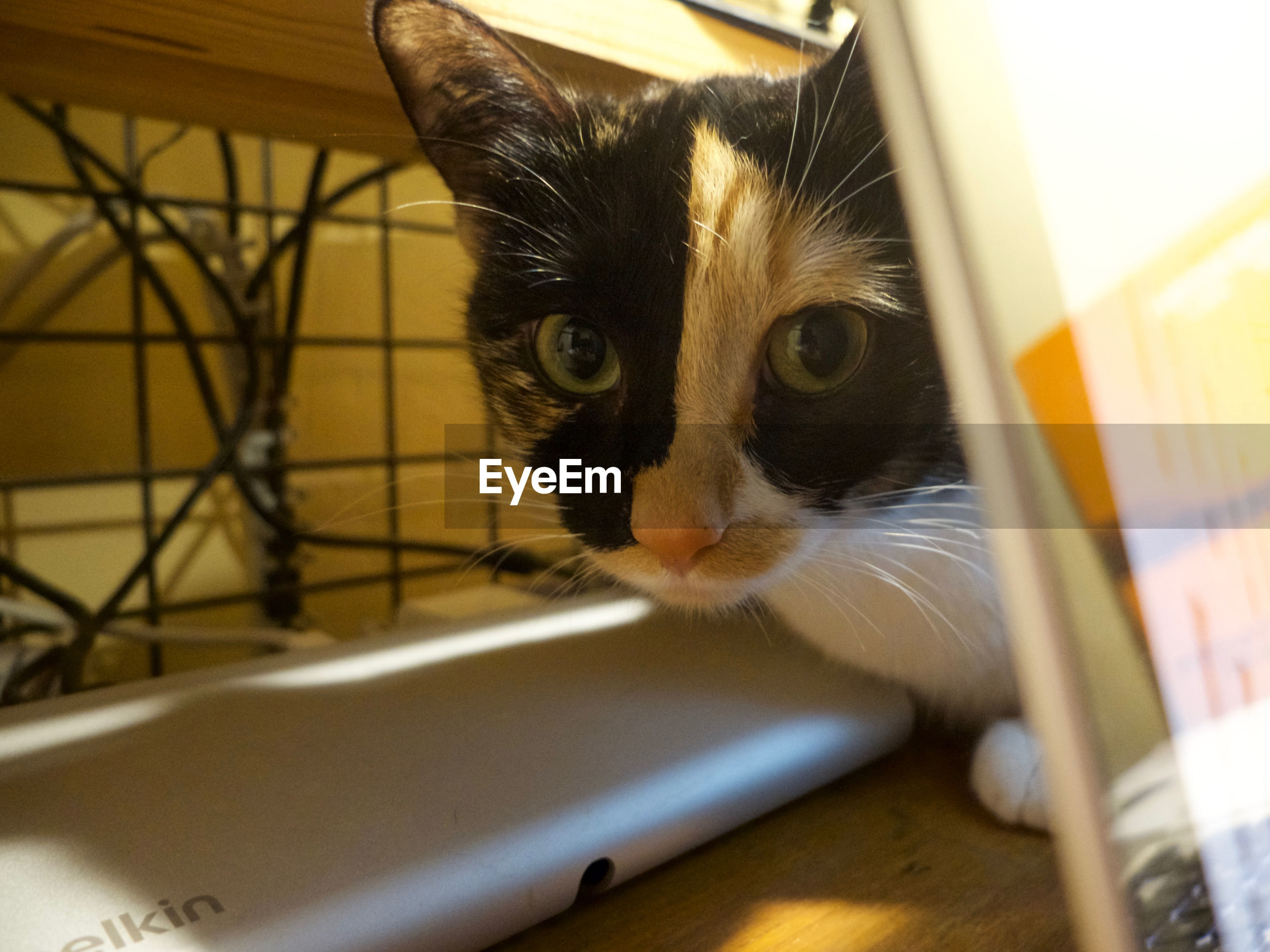 pets, domestic cat, domestic animals, one animal, animal themes, mammal, feline, whisker, no people, indoors, close-up, looking at camera, portrait, day