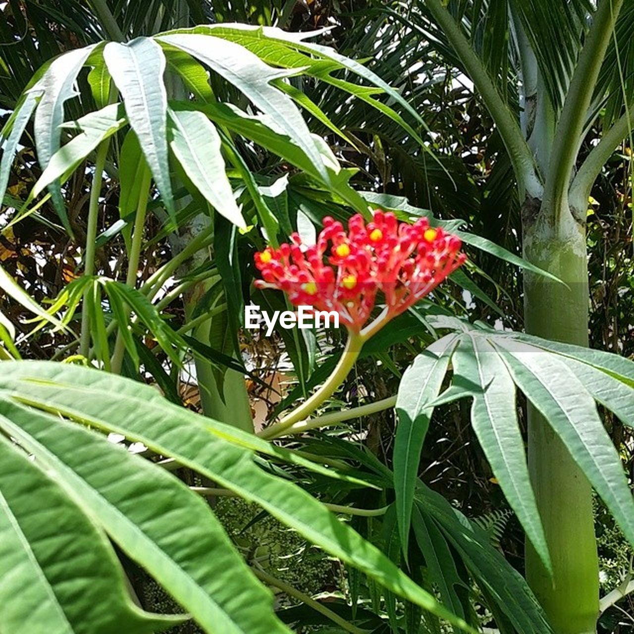 growth, leaf, green color, plant, nature, beauty in nature, outdoors, day, freshness, flower, no people, red, fragility, blooming, close-up, flower head
