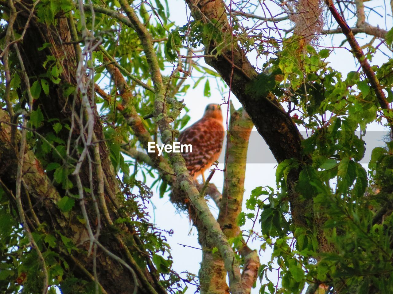 tree, plant, animal themes, animal, animal wildlife, one animal, branch, low angle view, animals in the wild, nature, vertebrate, bird, perching, growth, no people, day, outdoors, green color, sky, leaf
