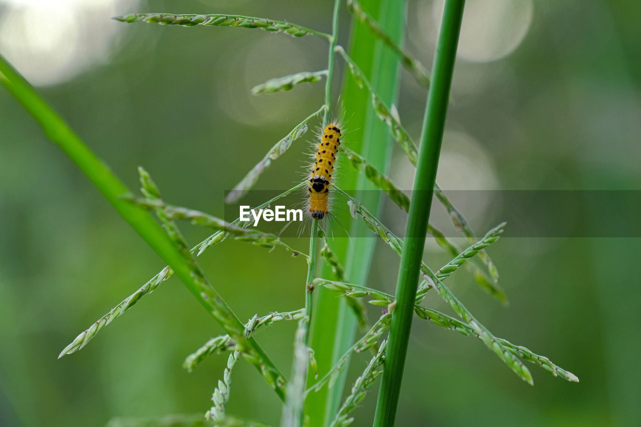 animals in the wild, invertebrate, animal wildlife, insect, animal themes, animal, one animal, plant, green color, close-up, day, focus on foreground, nature, no people, growth, beauty in nature, leaf, plant part, outdoors, selective focus, blade of grass