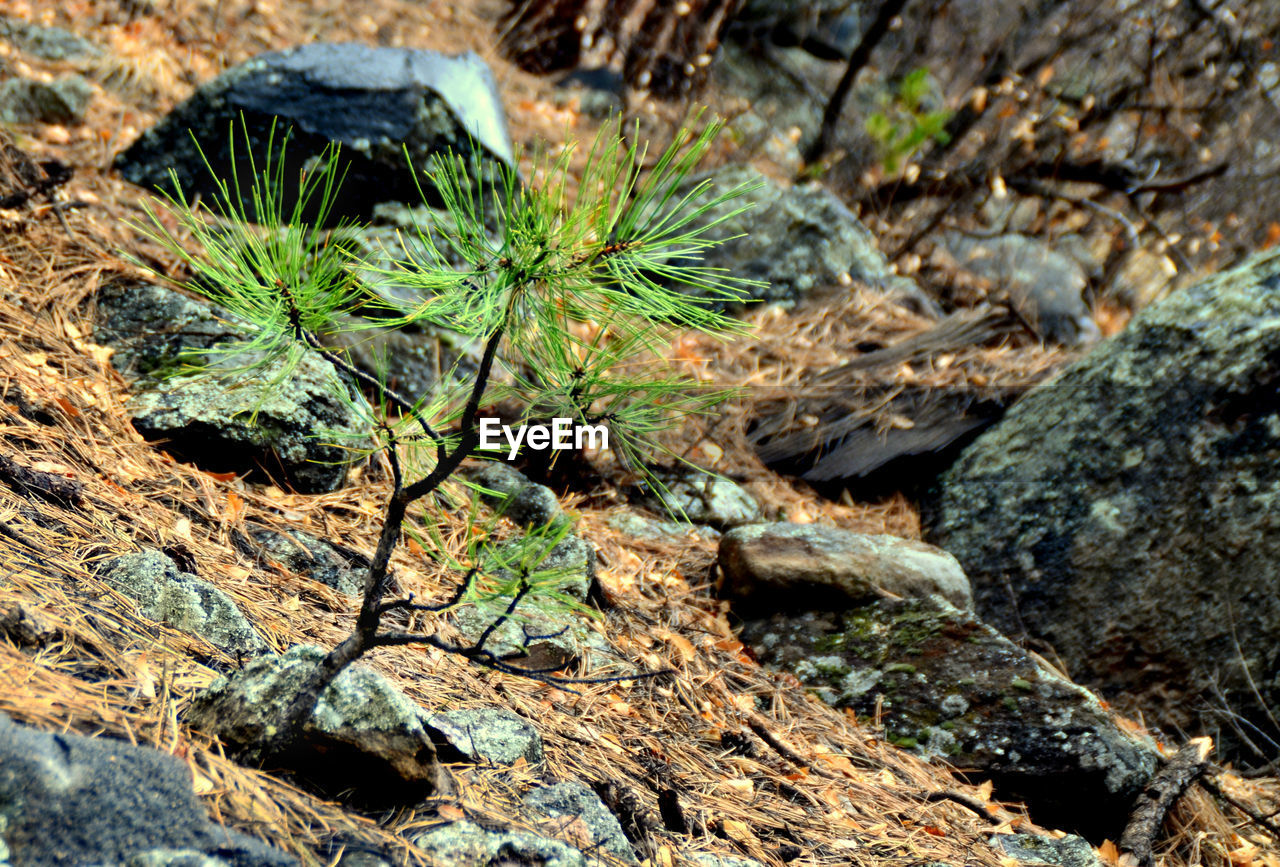 nature, no people, day, rock - object, growth, close-up, outdoors, plant, tree