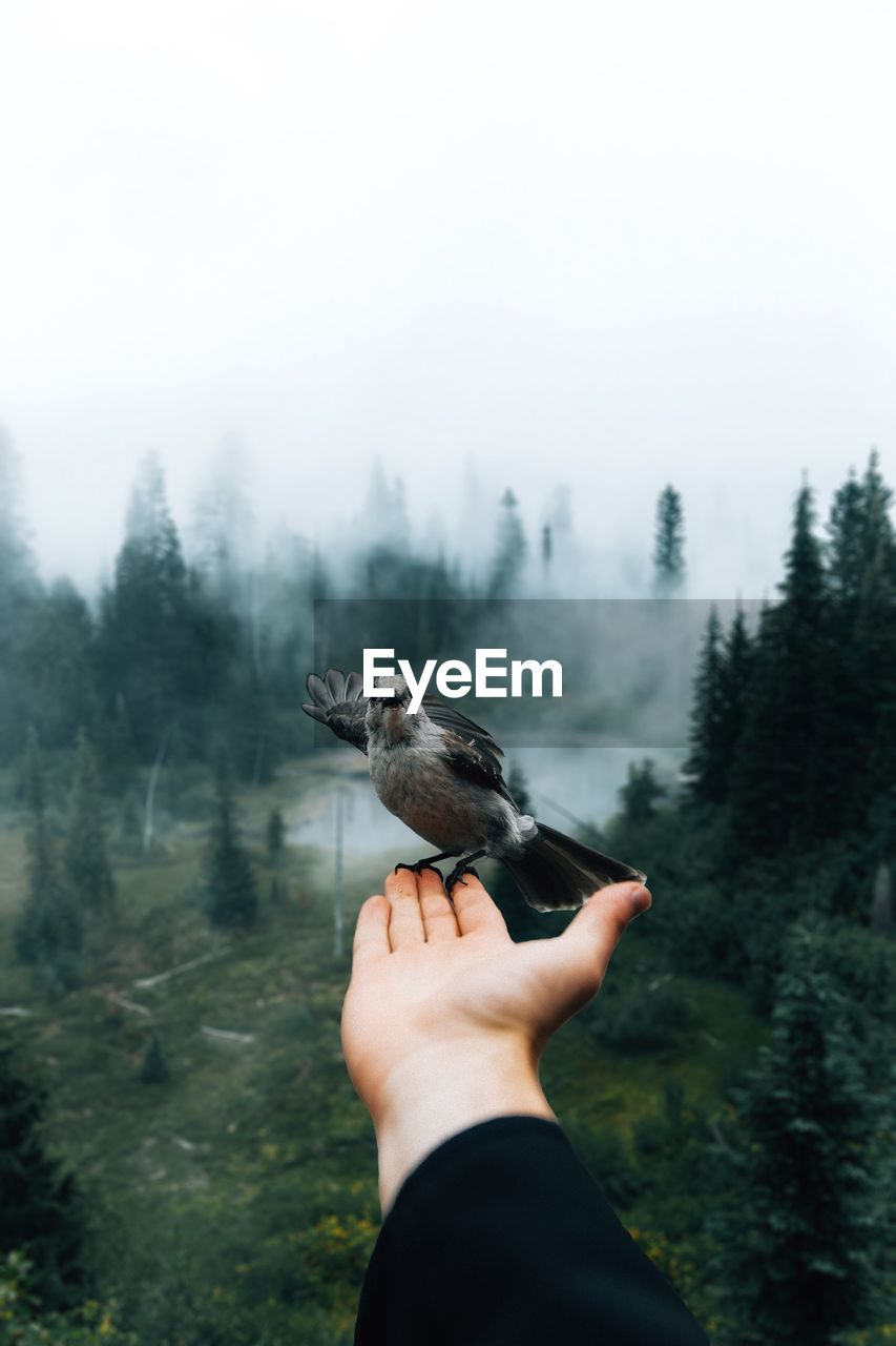 human hand, one person, one animal, hand, bird, tree, real people, vertebrate, human body part, animal wildlife, animals in the wild, day, plant, nature, personal perspective, holding, leisure activity, finger, body part, outdoors