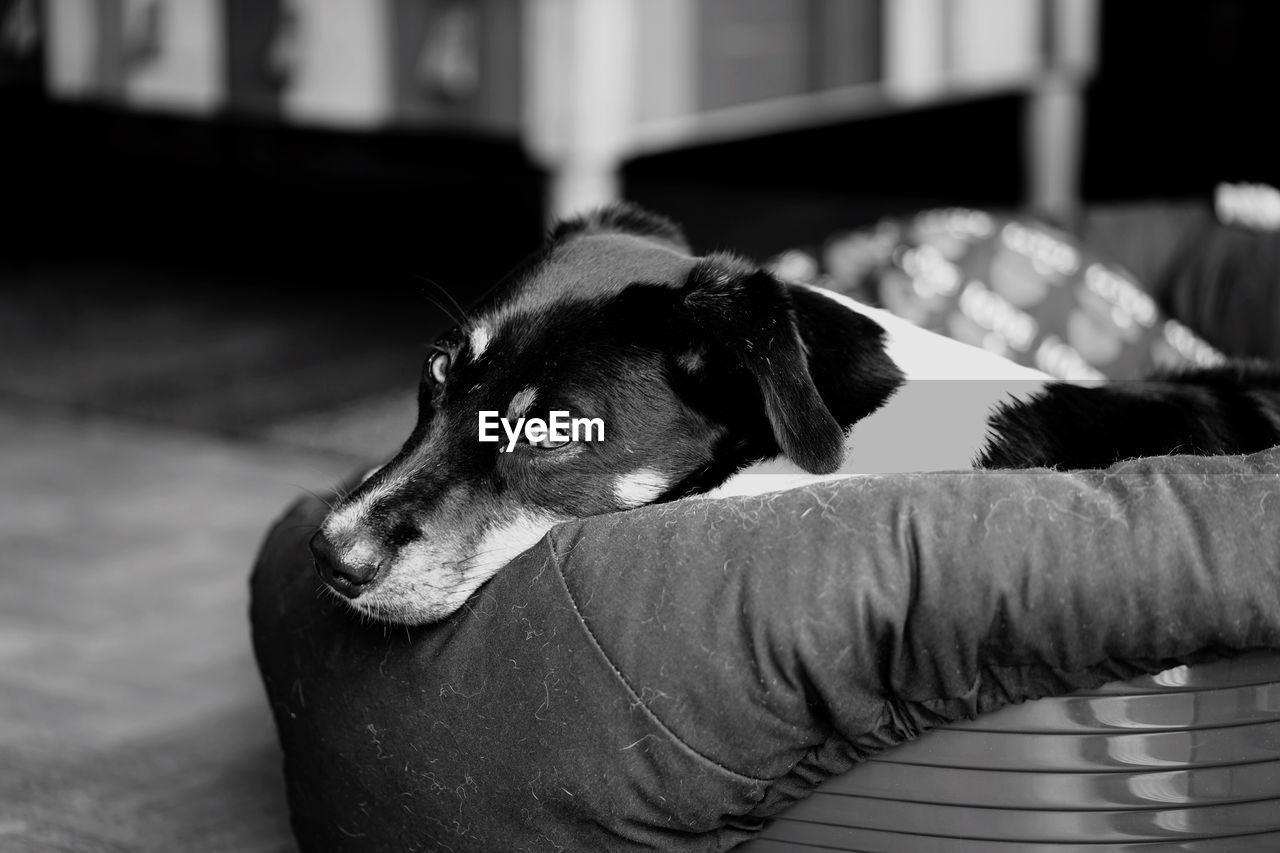 Portrait of dog resting on pet bed