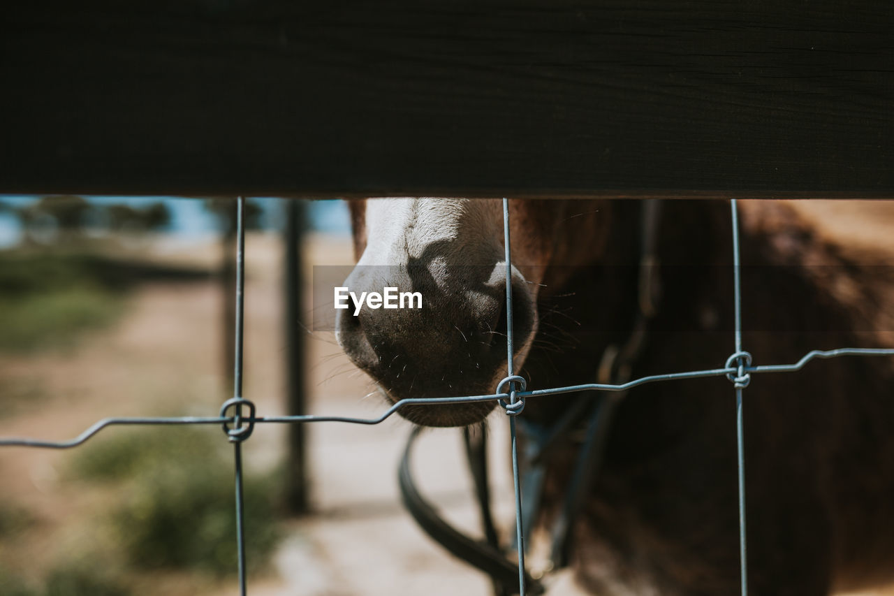 animal themes, mammal, one animal, animal, domestic animals, domestic, pets, vertebrate, fence, boundary, barrier, livestock, animal body part, focus on foreground, no people, animal head, metal, animal wildlife, horse, day, herbivorous, outdoors, stable, animal eye, snout, animal mouth, ranch, animal nose