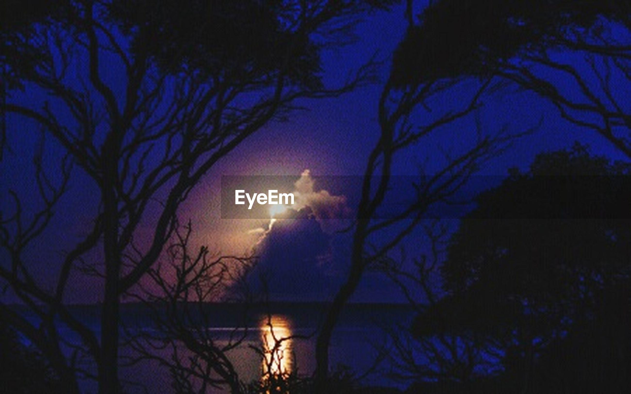 silhouette, tree, sky, sunset, tranquility, beauty in nature, bare tree, scenics, tranquil scene, branch, night, nature, idyllic, illuminated, sun, dark, glowing, dusk, moon, cloud - sky