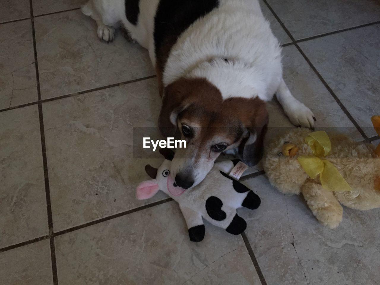 High angle view of dog on floor