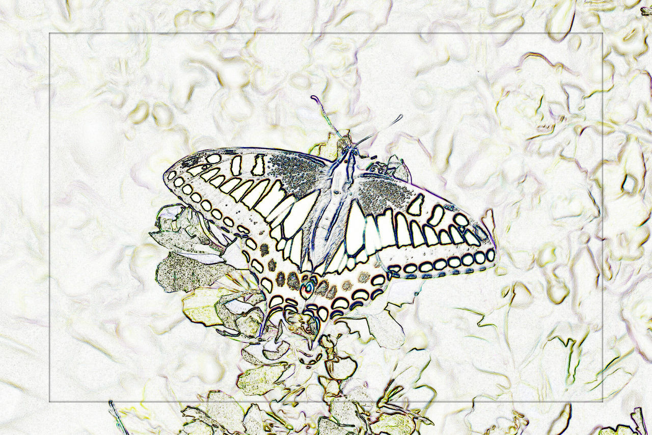 butterfly - insect, insect, butterfly, one animal, animal themes, animals in the wild, pattern, animal markings, no people, leaf, nature, close-up, fragility, flower, outdoors, beauty in nature, day, flower head