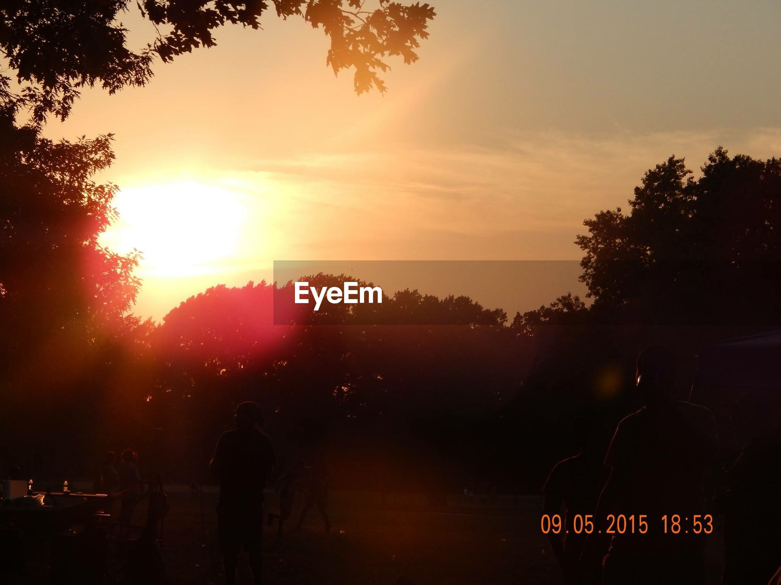 sunset, tree, silhouette, sun, orange color, sky, beauty in nature, sunlight, scenics, nature, sunbeam, tranquility, tranquil scene, lens flare, idyllic, outdoors, growth, branch, back lit, cloud - sky