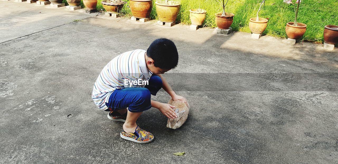 Full length of boy petting rabbit on road