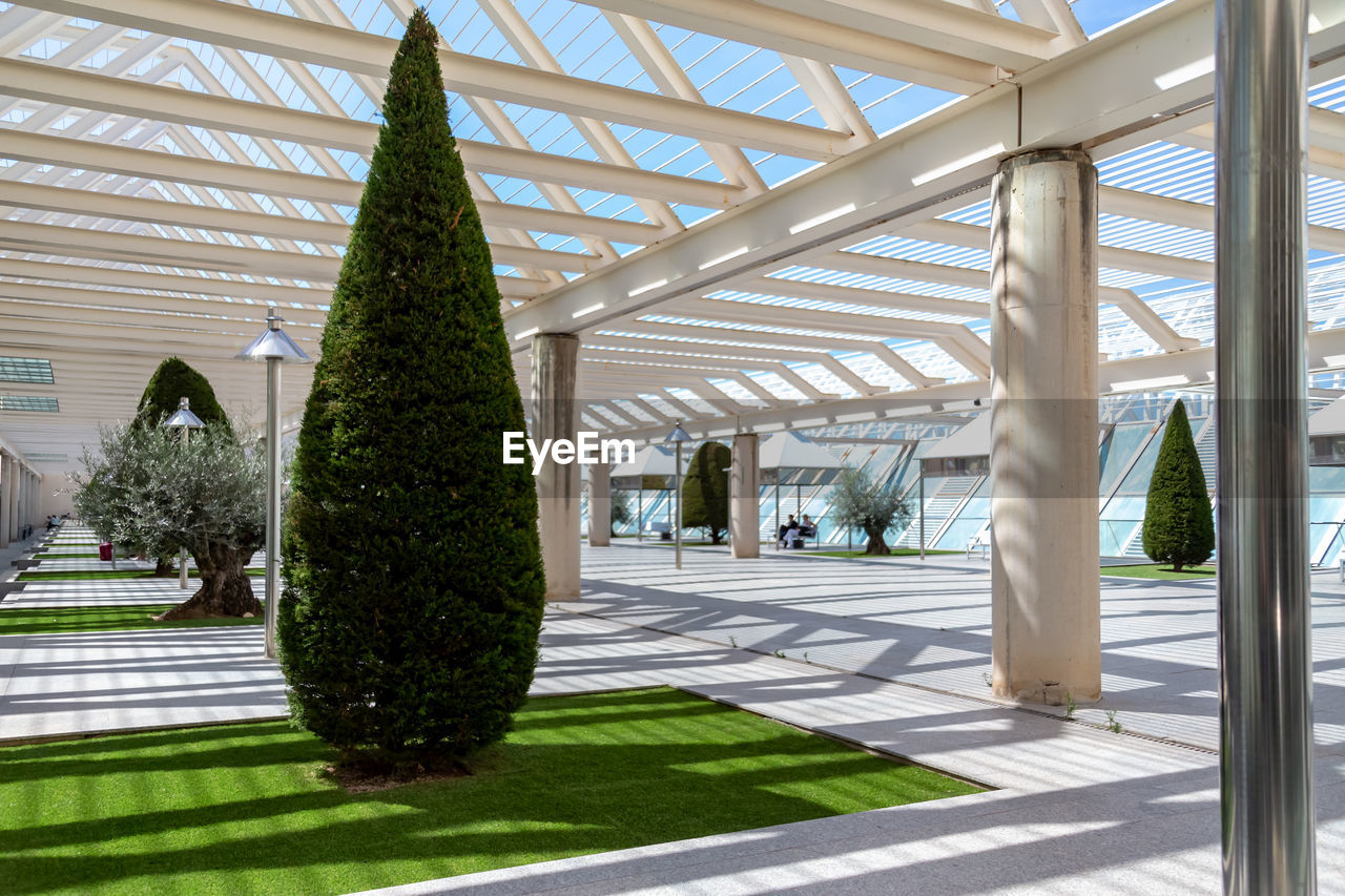 architecture, plant, built structure, tree, day, sunlight, nature, green color, architectural column, no people, growth, shadow, outdoors, footpath, roof, tropical climate, building, garden, hedge